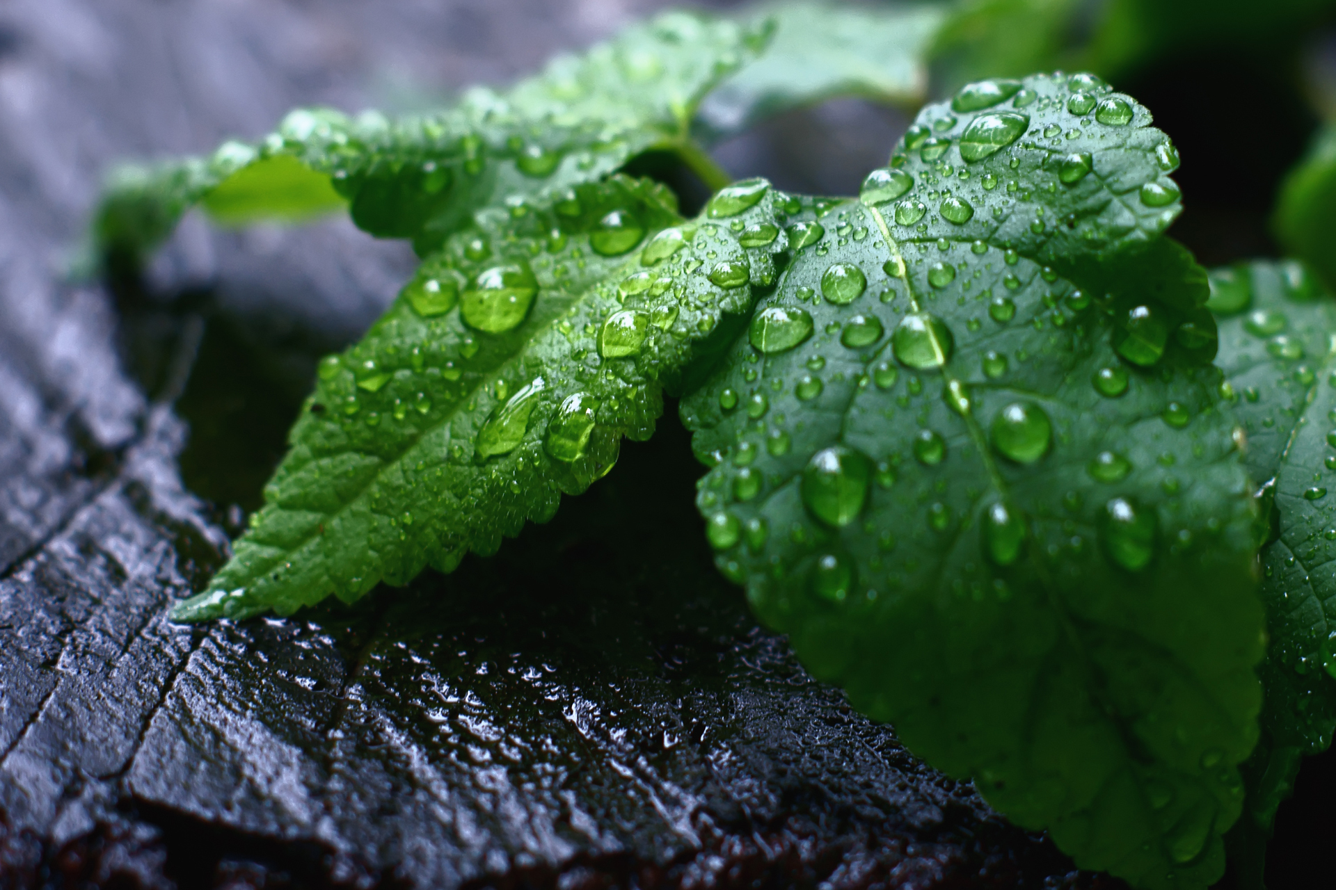 after rain wallpapers 39809