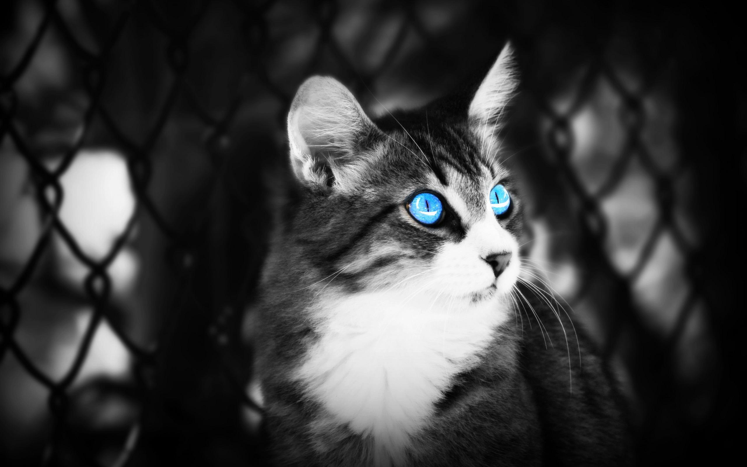 animal eyes 34517