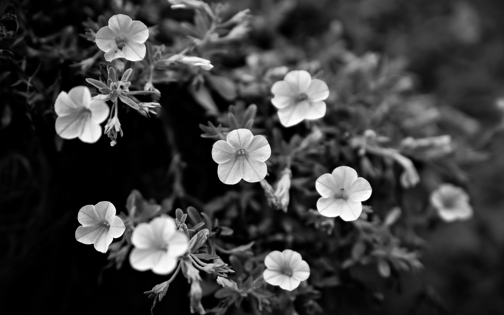 beautiful grayscale wallpaper 35780
