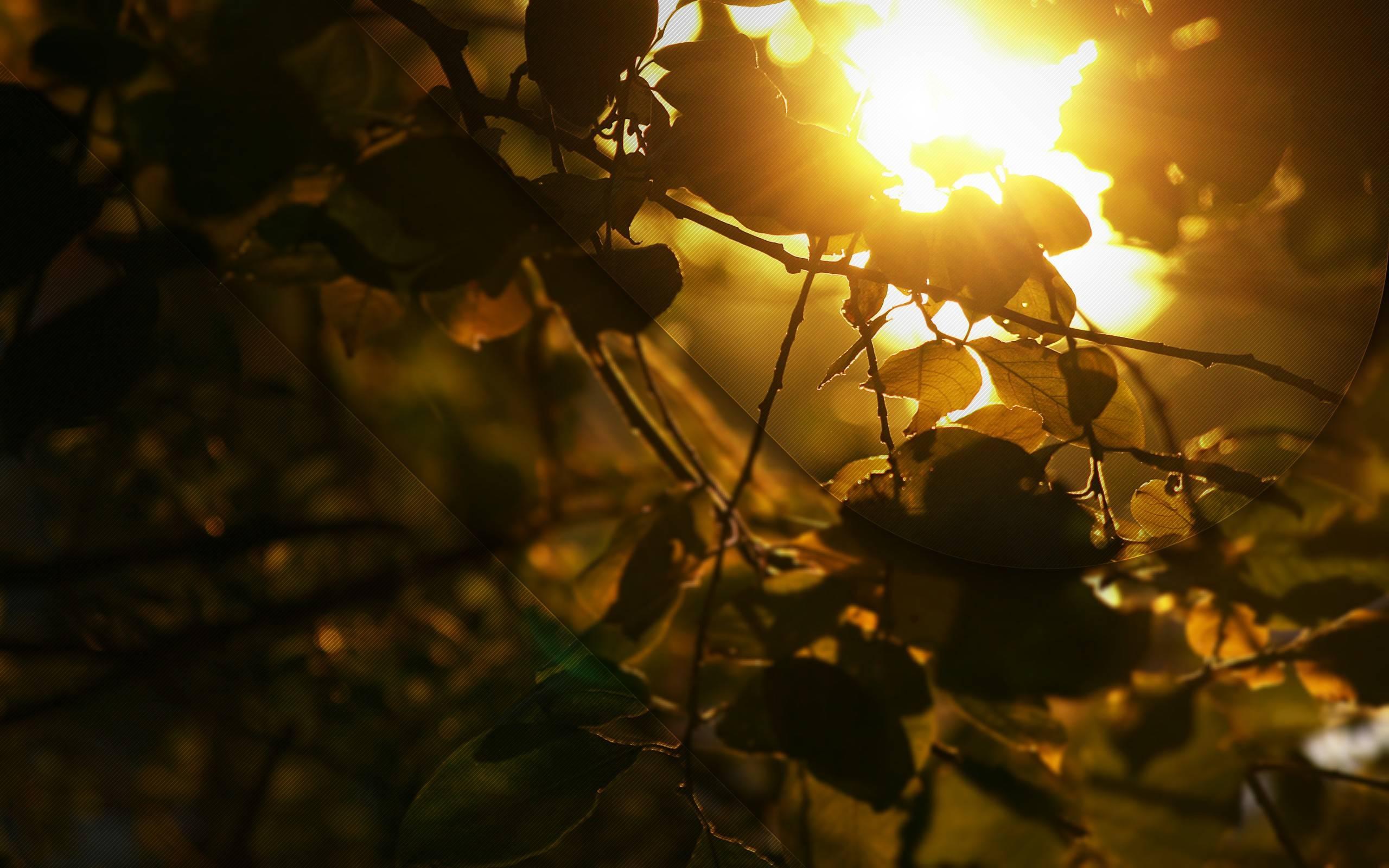 beautiful sunlight 36072