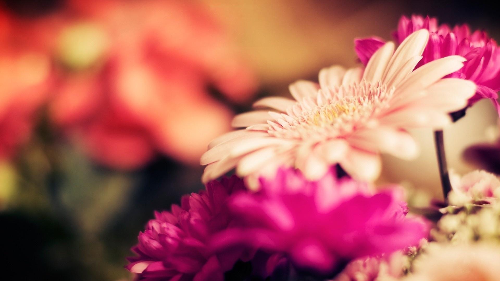 bright flowers hd 35300