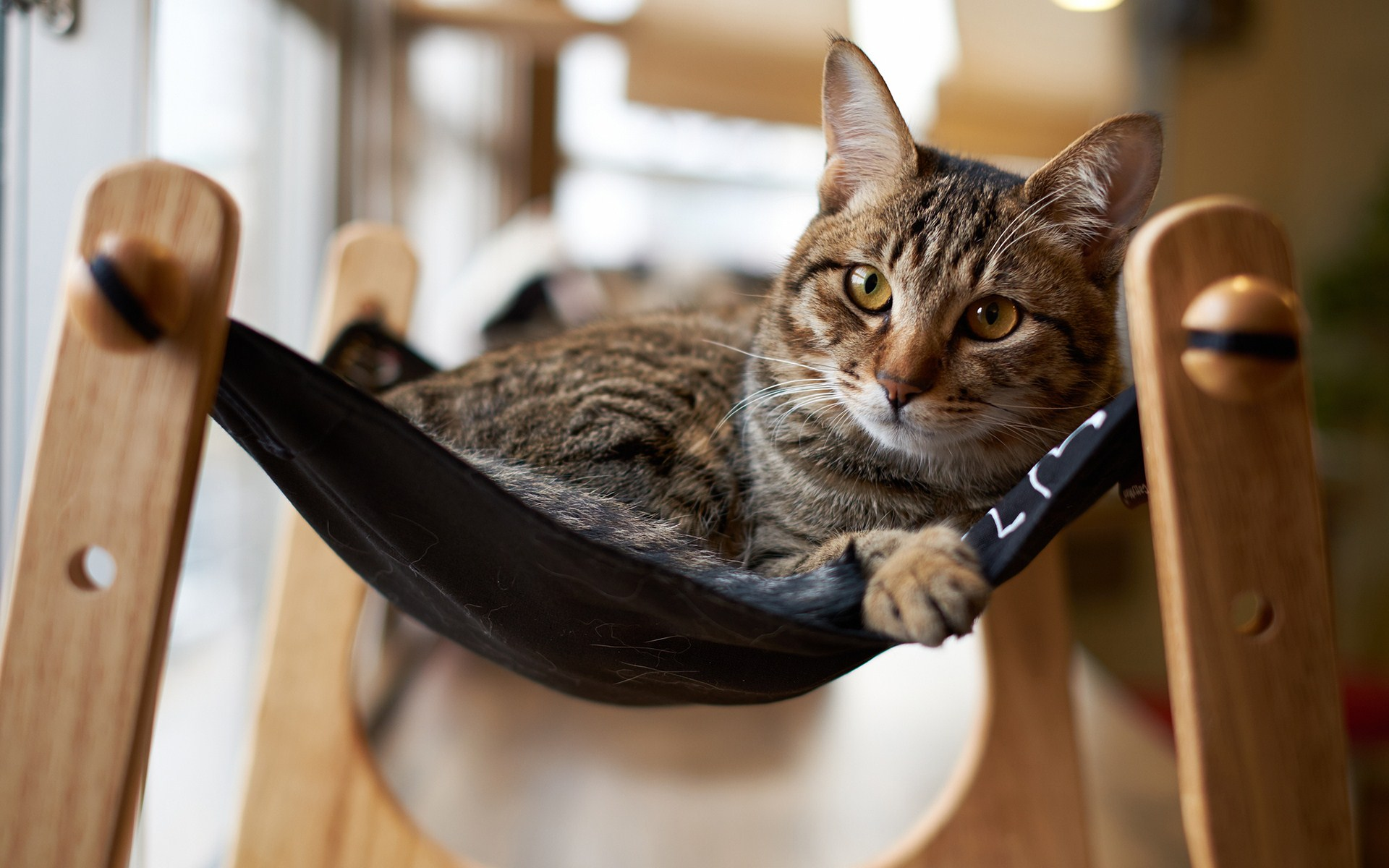 cat hammock wallpaper 43364