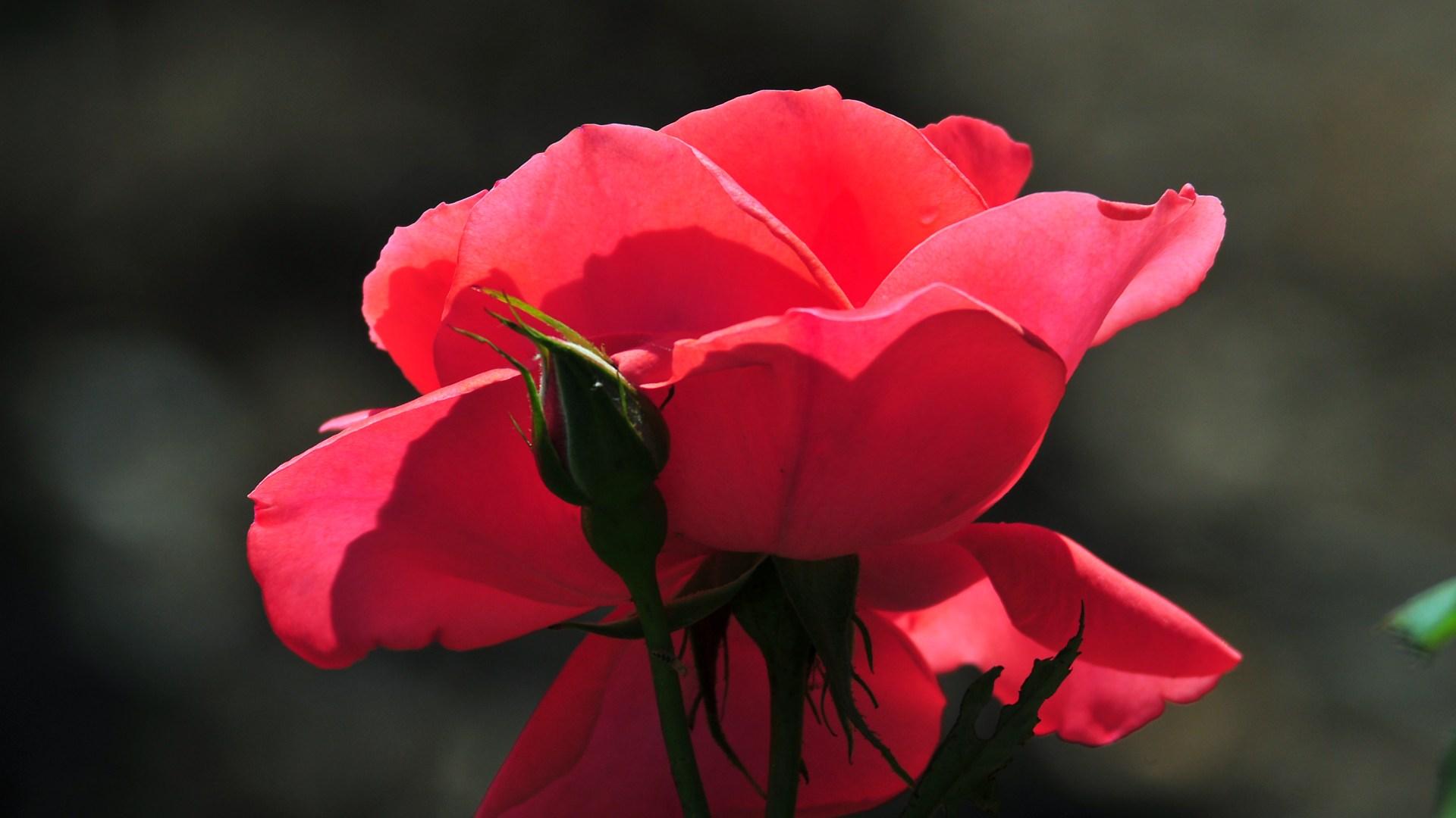 cool flower 23946