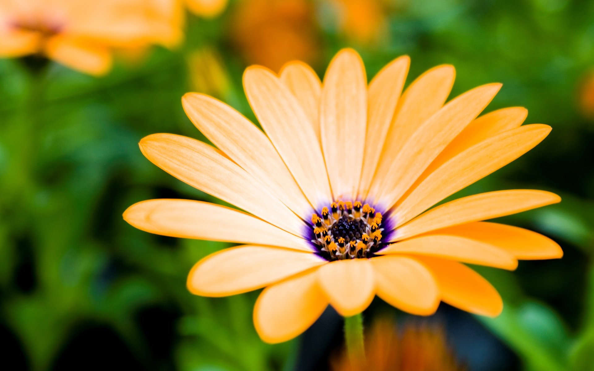 cool flower pictures 23956