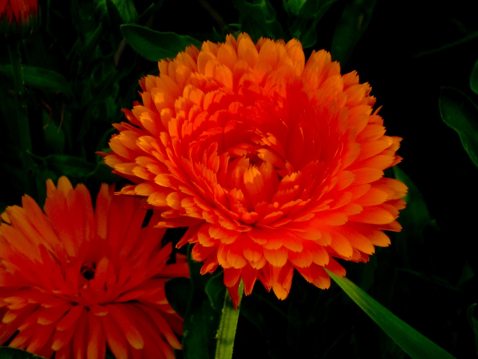 cool flowers 23949