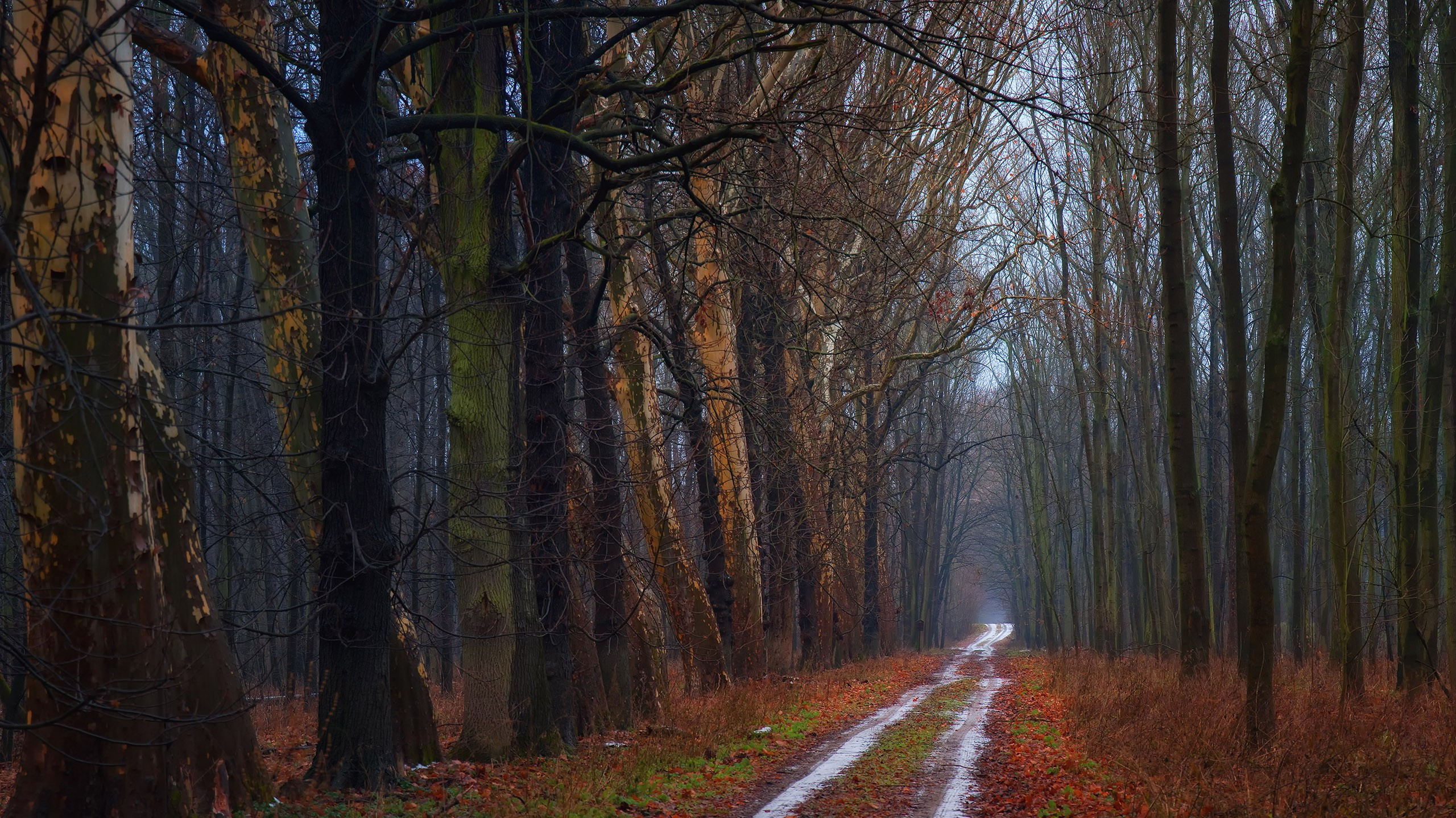 Cool Forest Road Wallpaper 36140 2560x1440 px ...