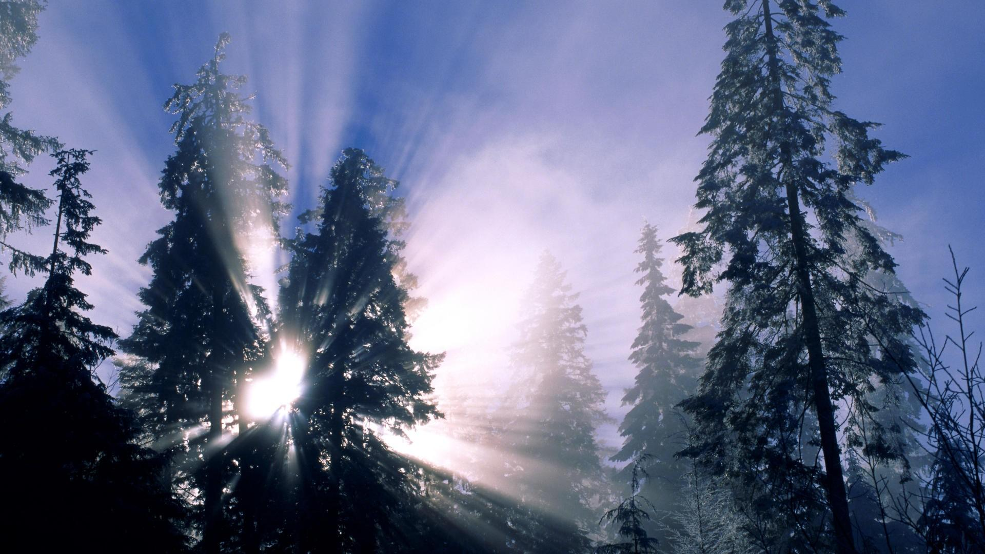 cool frozen forest wallpaper 34213