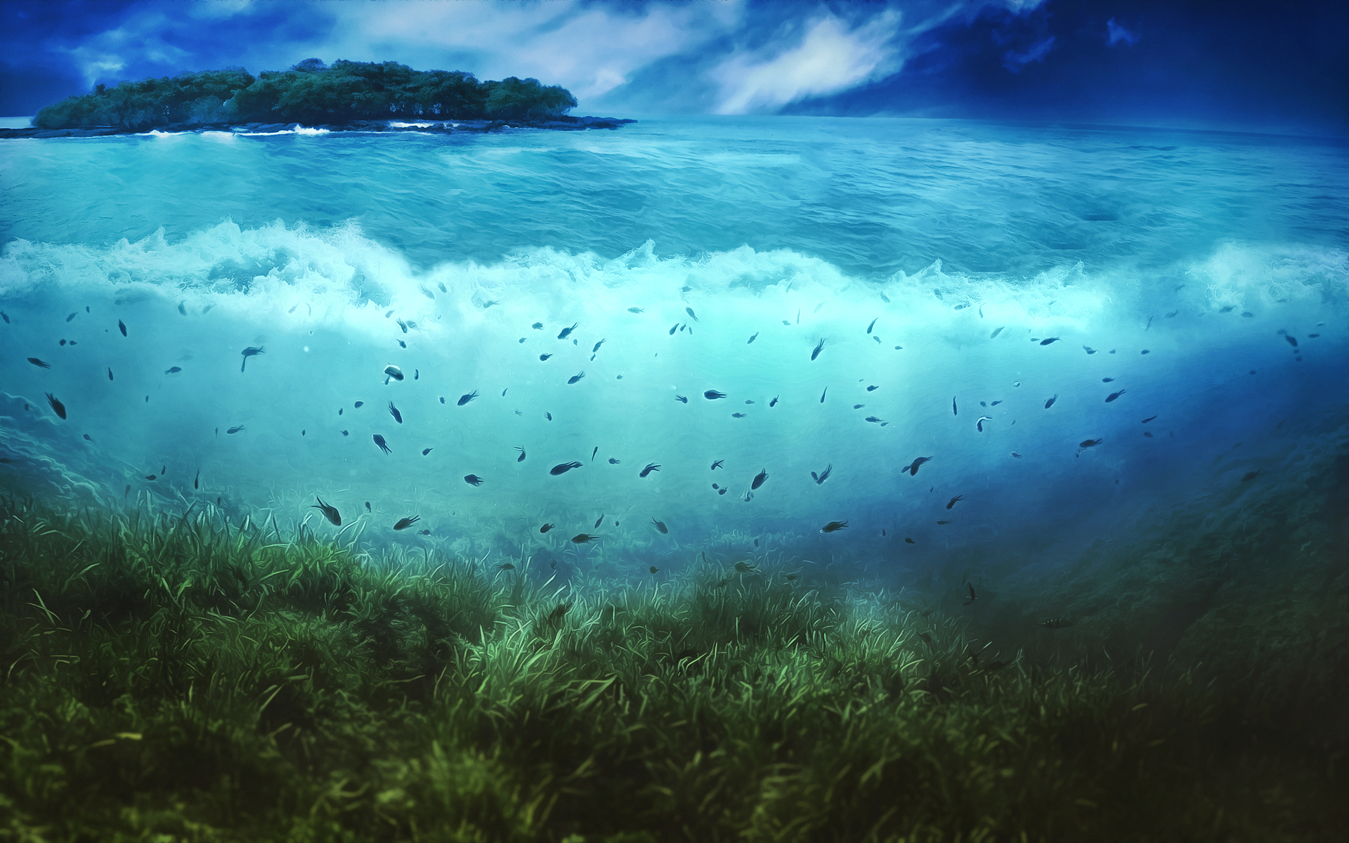 cool ocean life wallpaper 30941