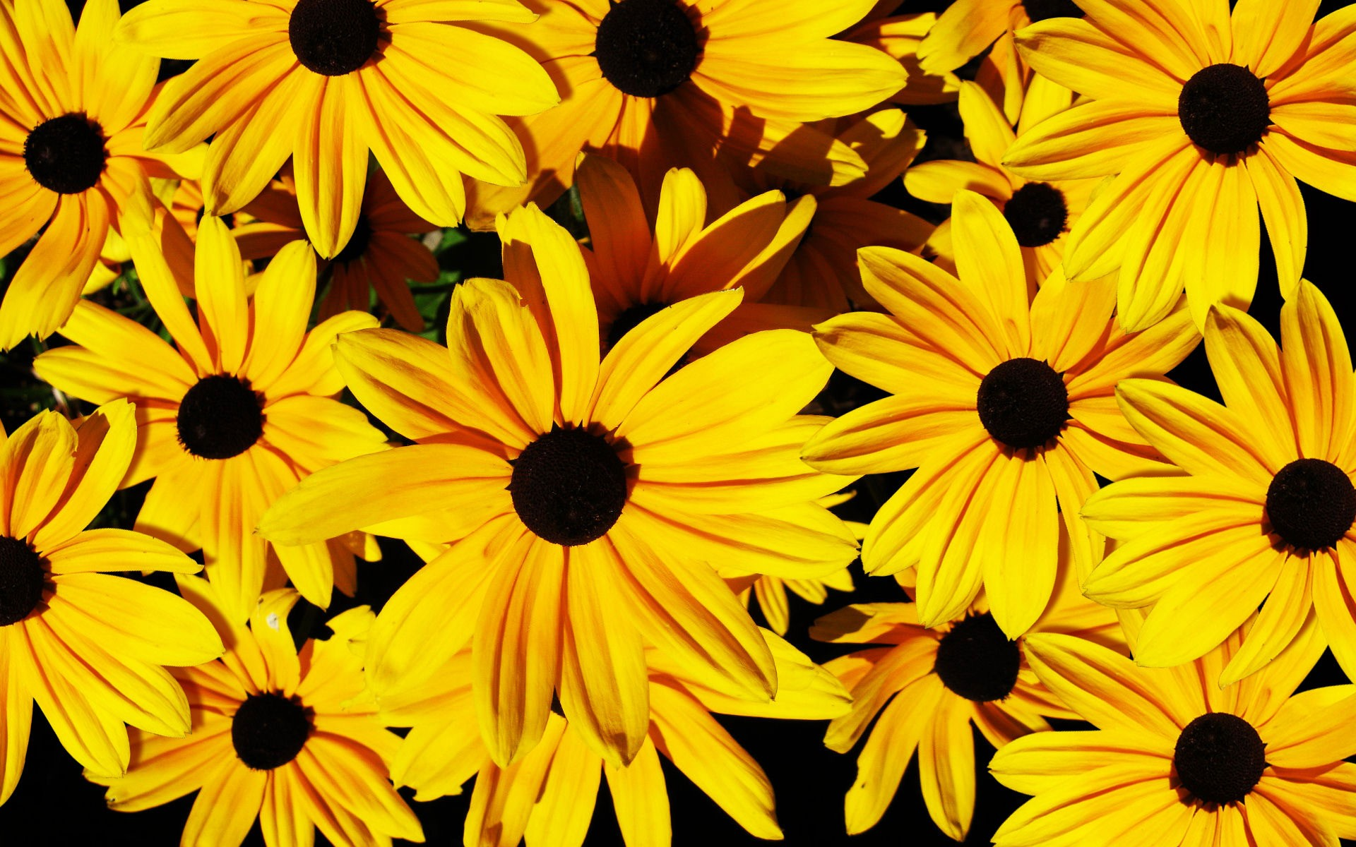 cool yellow flowers 23945