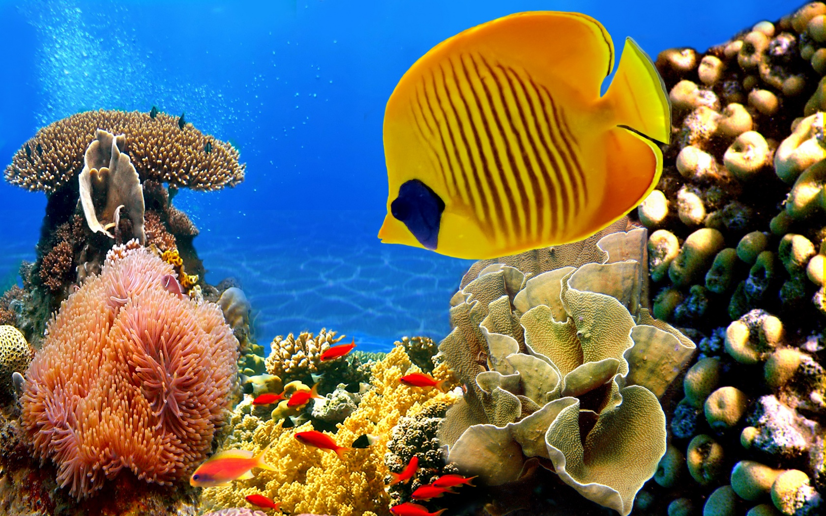 coral reef wallpaper 25133