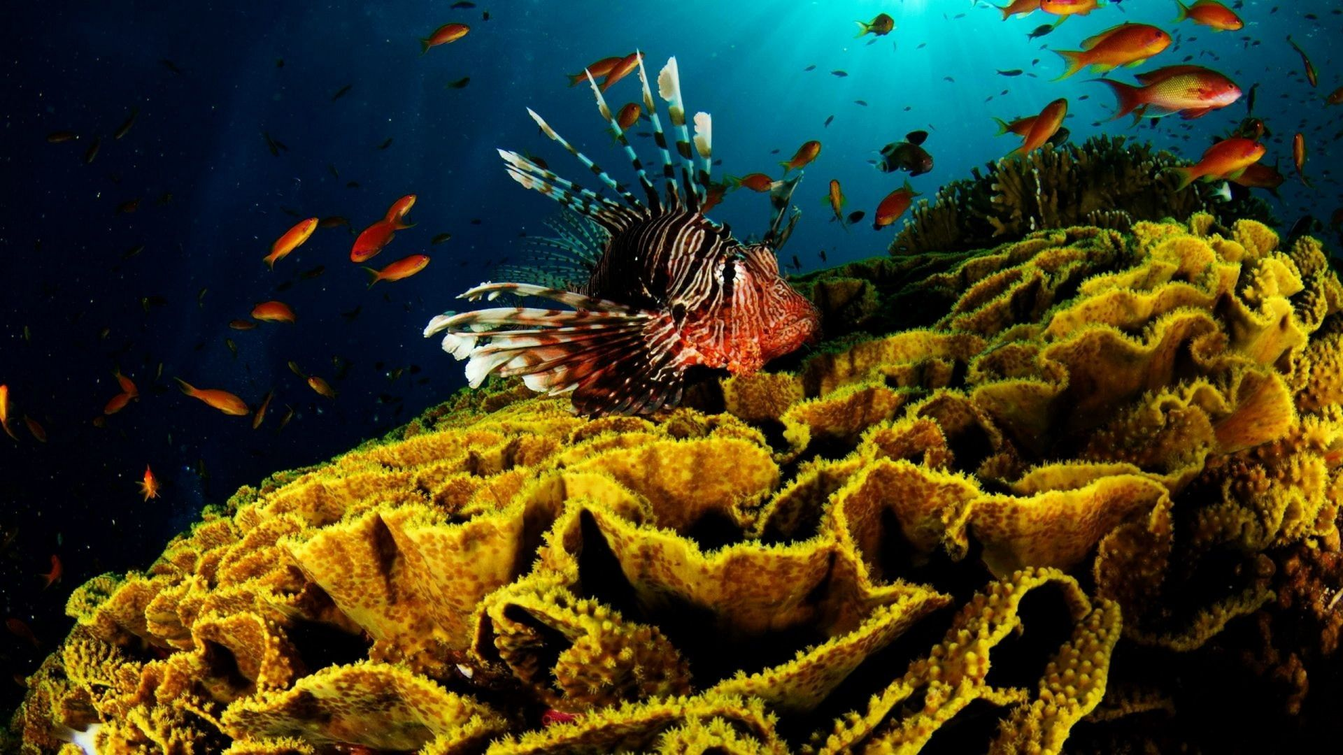 coral reef wallpaper 25134