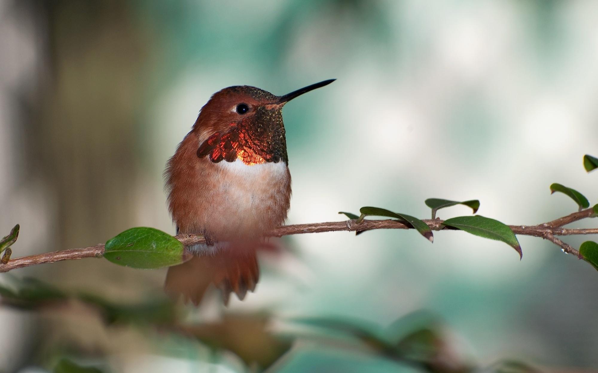 cute birds 21805