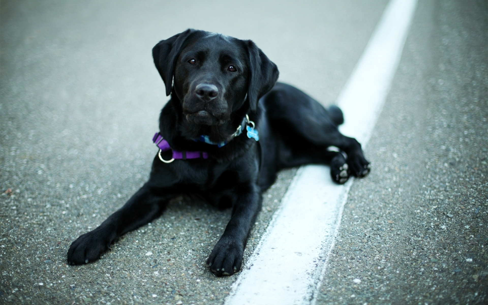 cute black dog wallpaper 44100