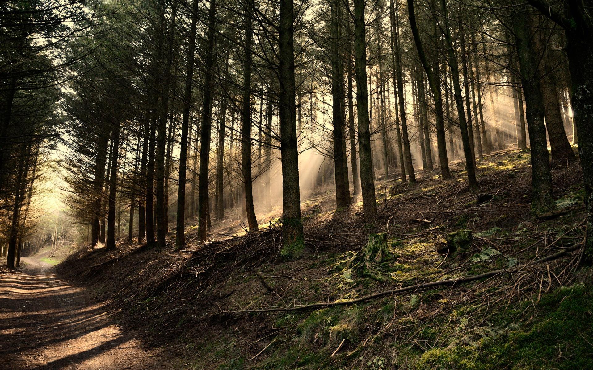 dark woods wallpaper 41985