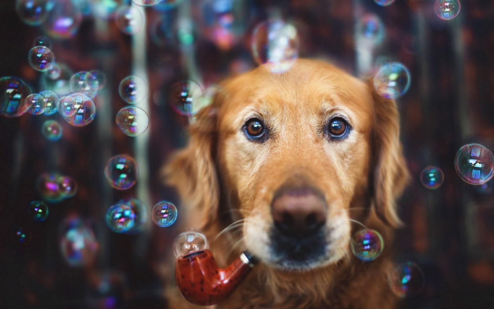 dog bubbles look wallpaper 44121