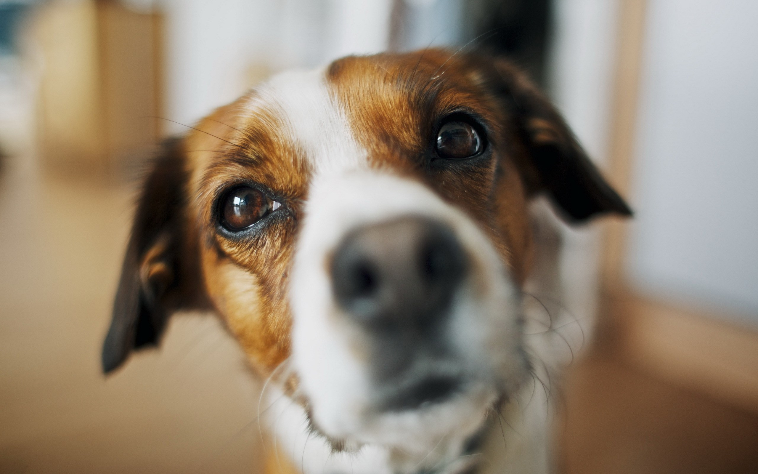 dog look close up wallpaper 44124