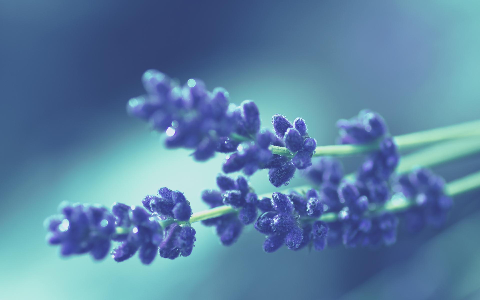 fantastic purple macro wallpaper 38010