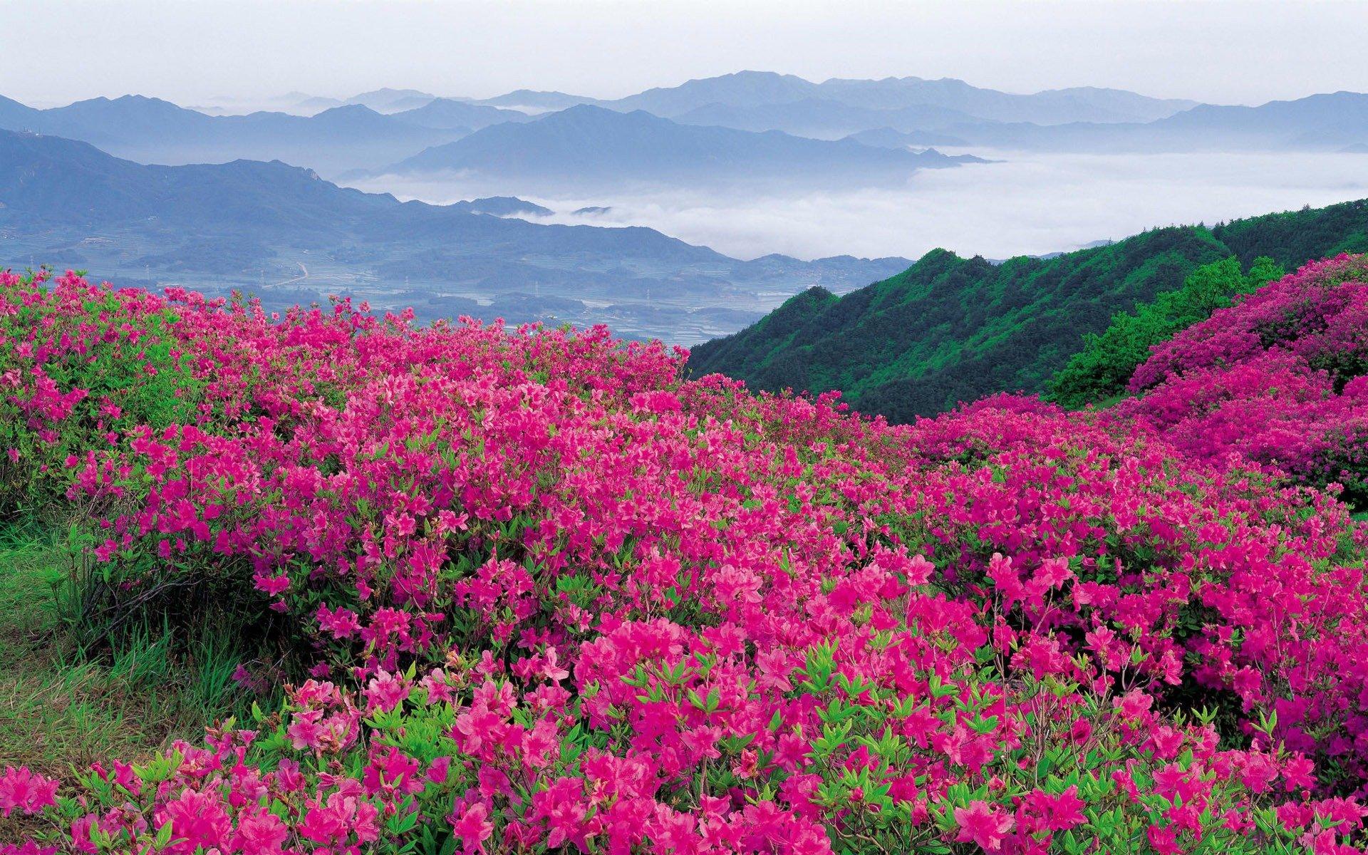 Flower Landscape 29012
