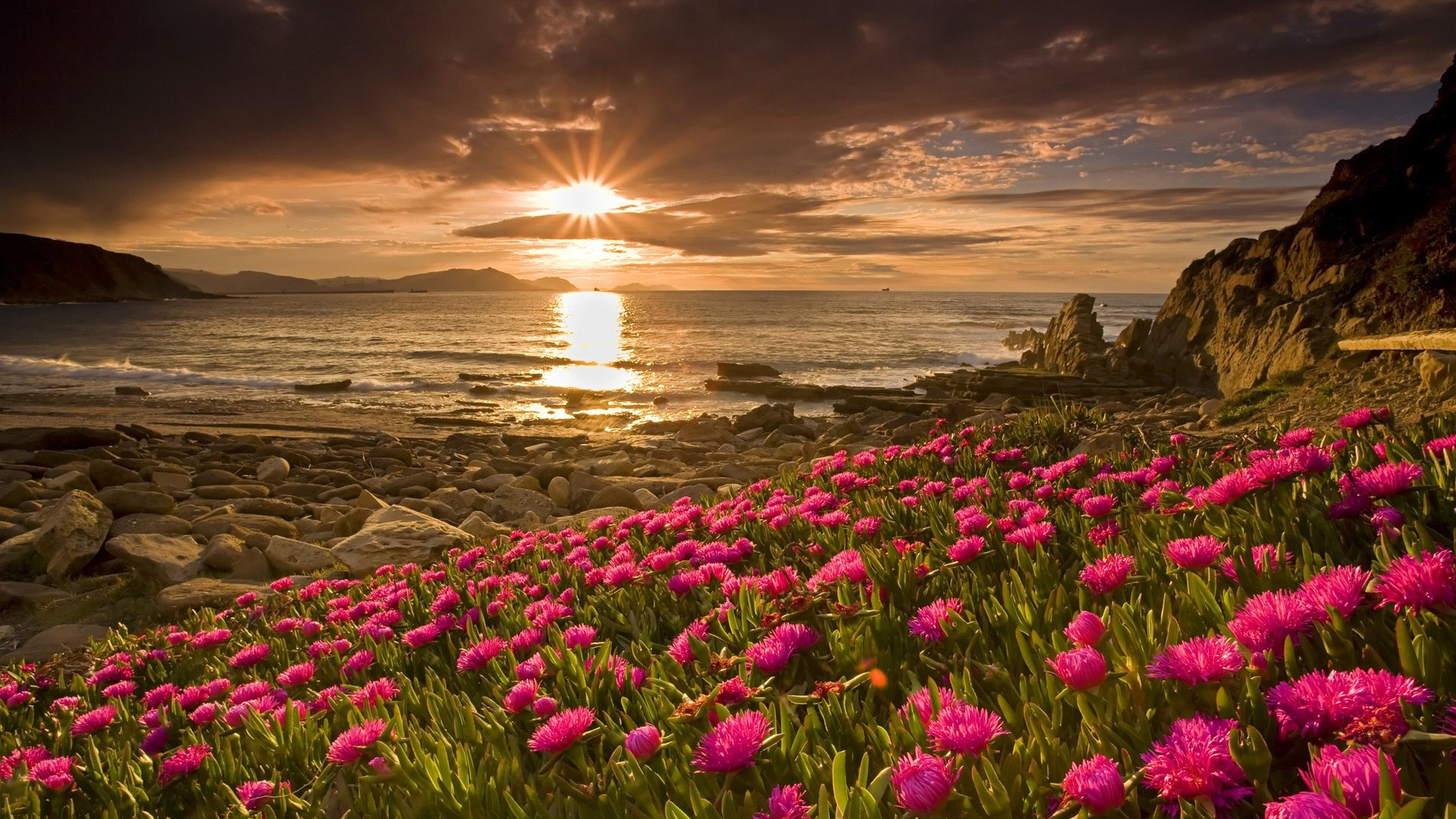 Flower landscape hd 29016 1920x1080 px for Flower landscape