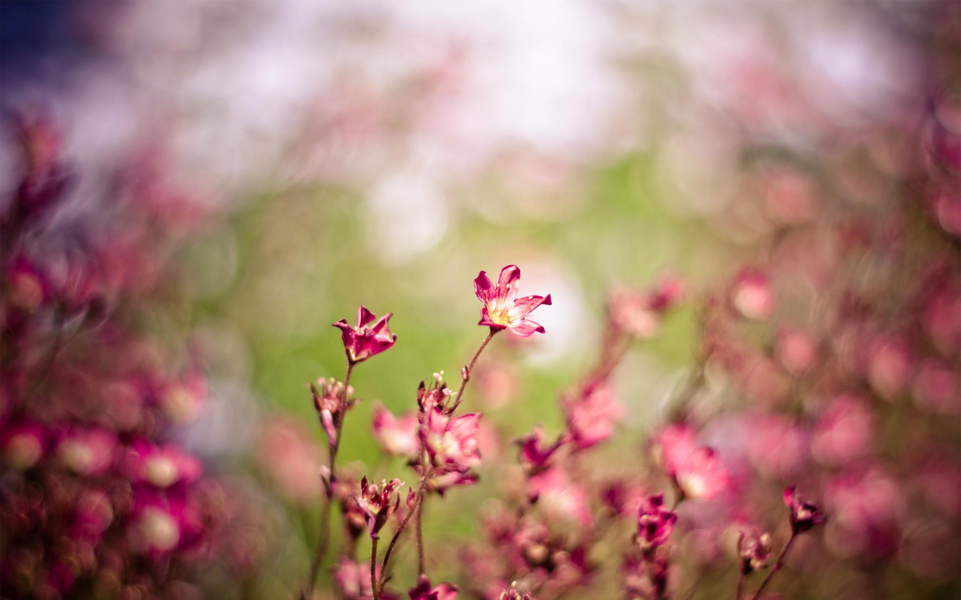 flowers landscape 29013