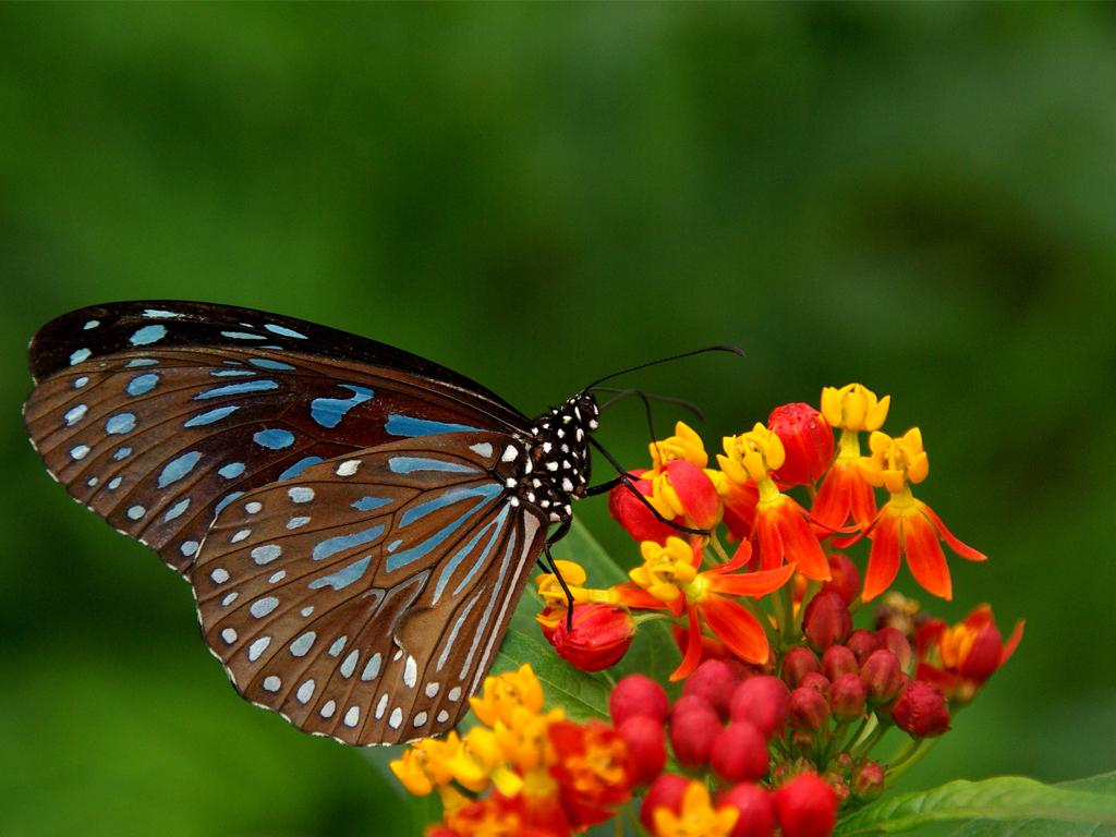 free butterfly wallpaper hd 21791