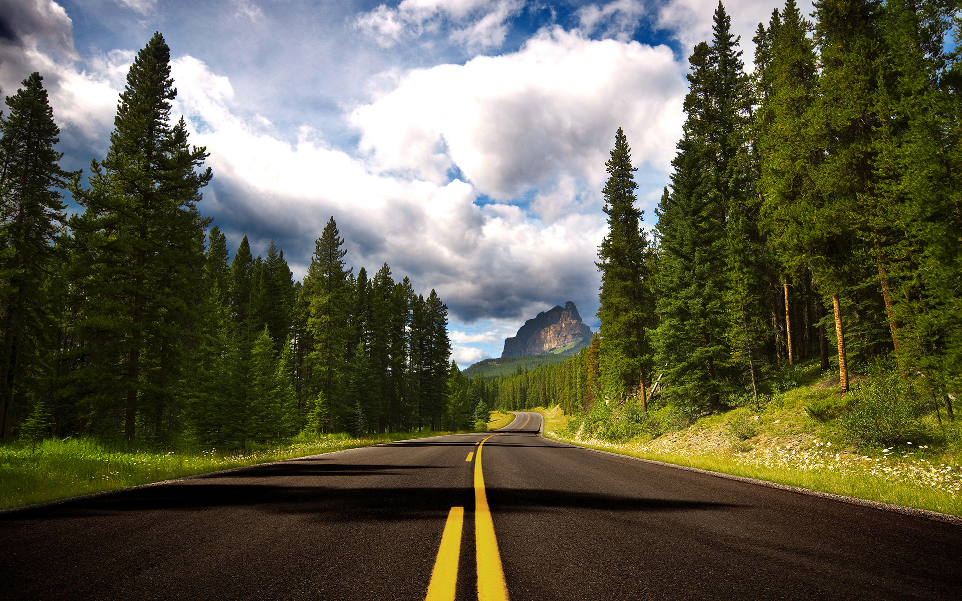 free forest road wallpaper 36141