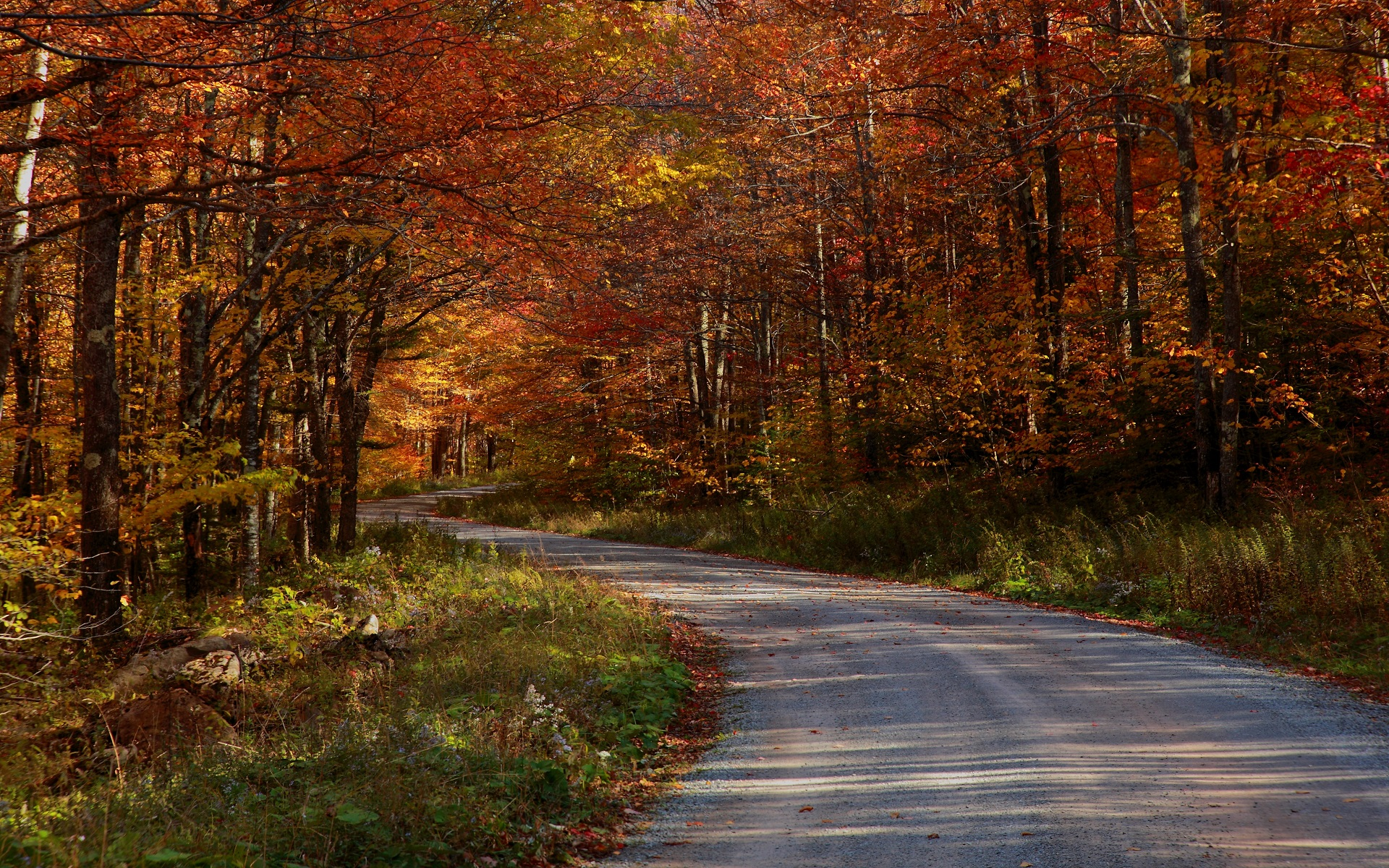 free forest road wallpaper 36146