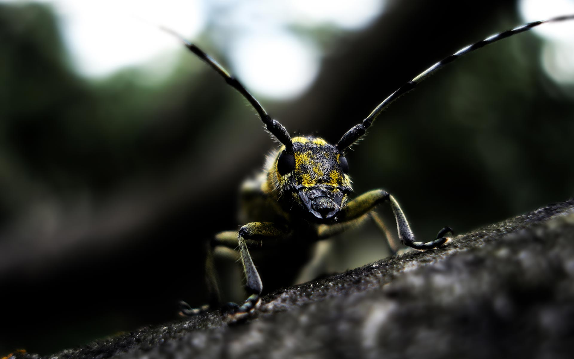 free insect wallpaper 24757