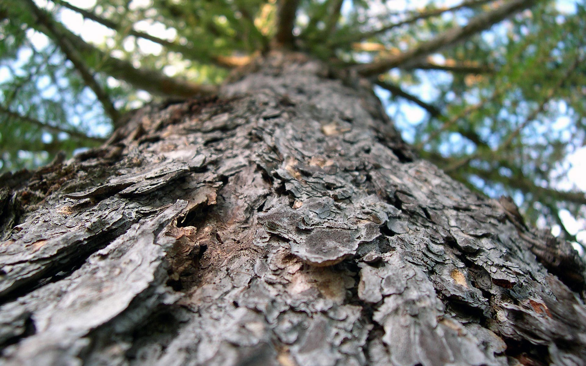 free tree bark wallpaper 26072