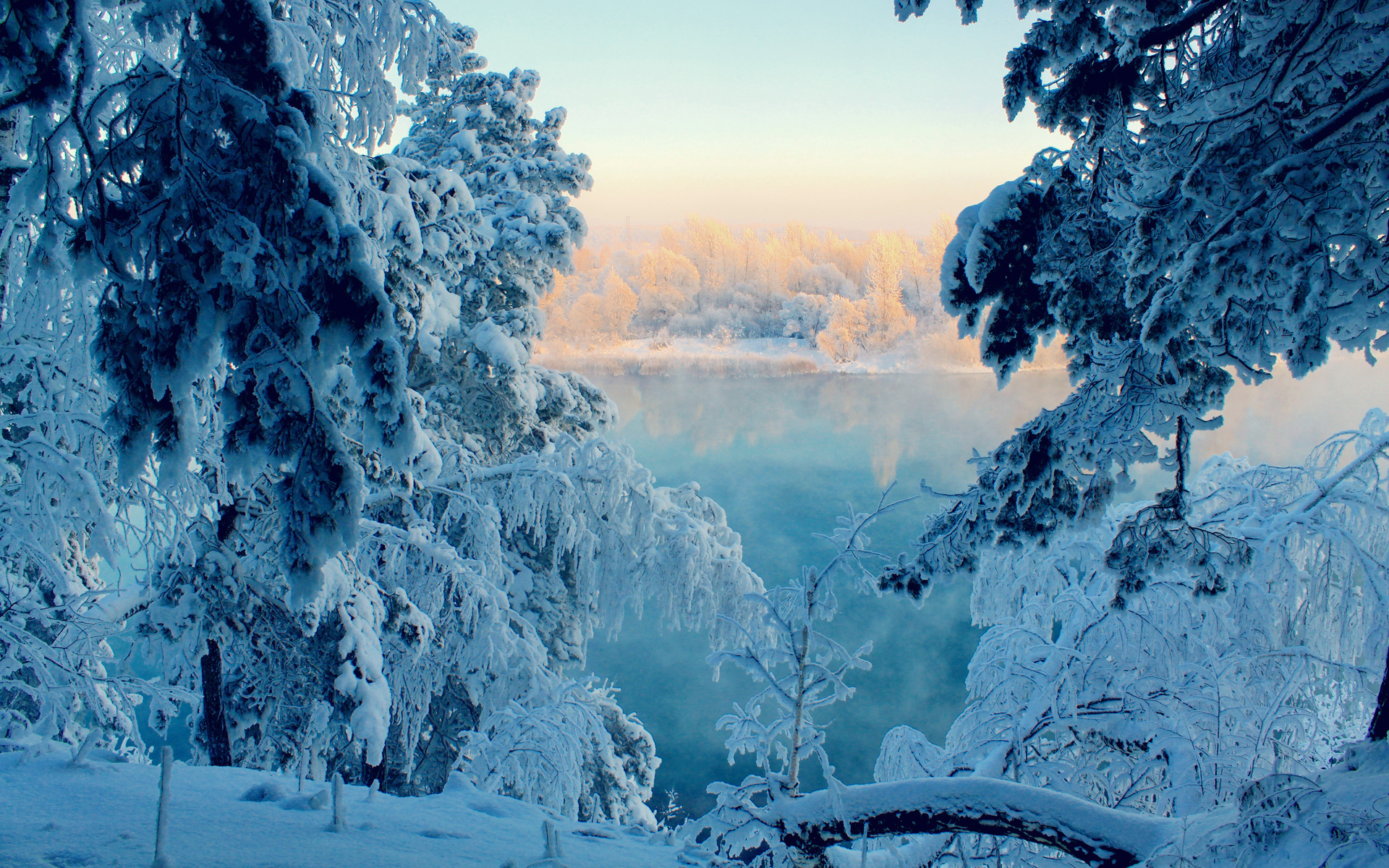 frozen forest 34220