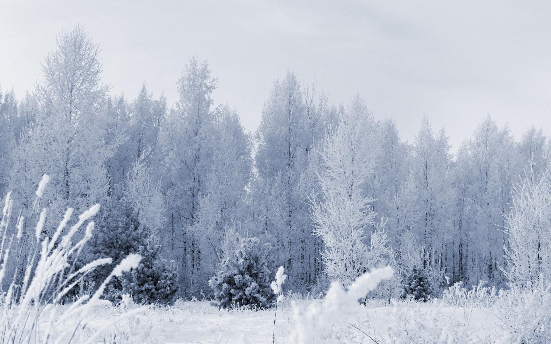 frozen forest 34225