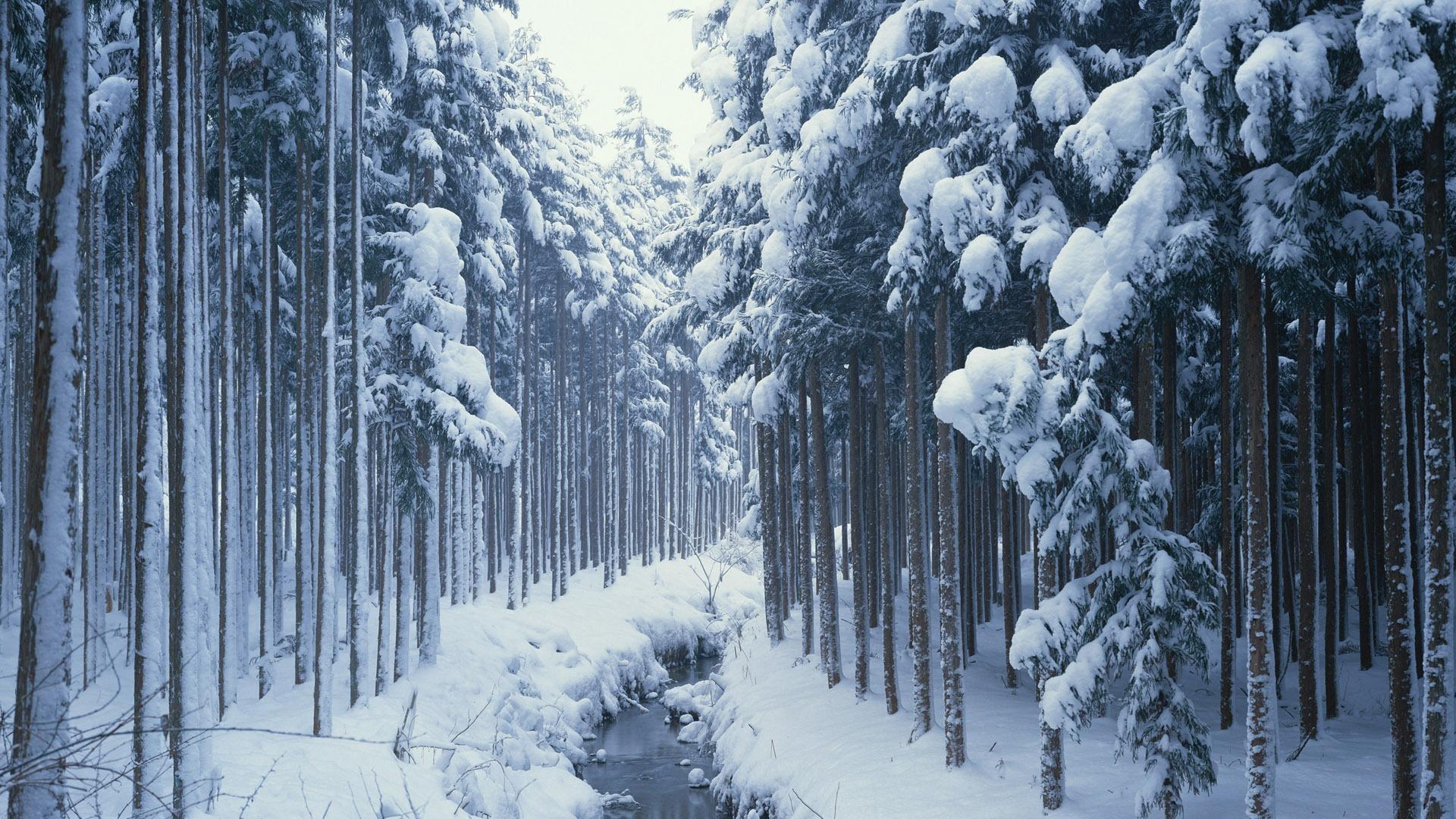 frozen forest 34227