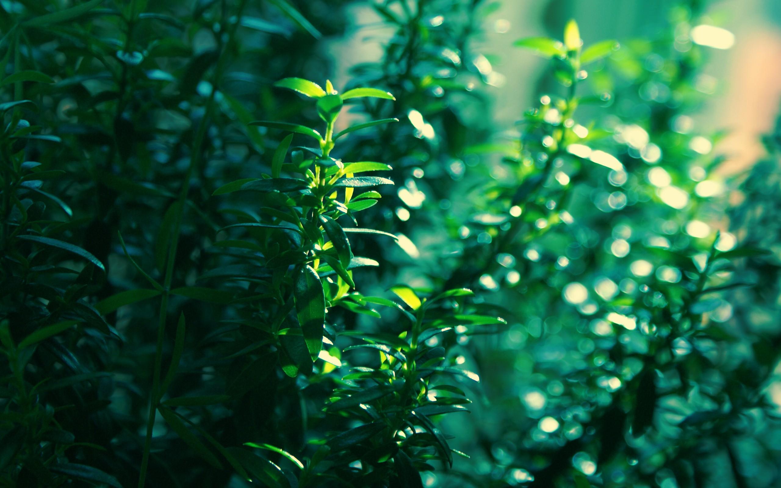 green nature macro wallpaper 44115