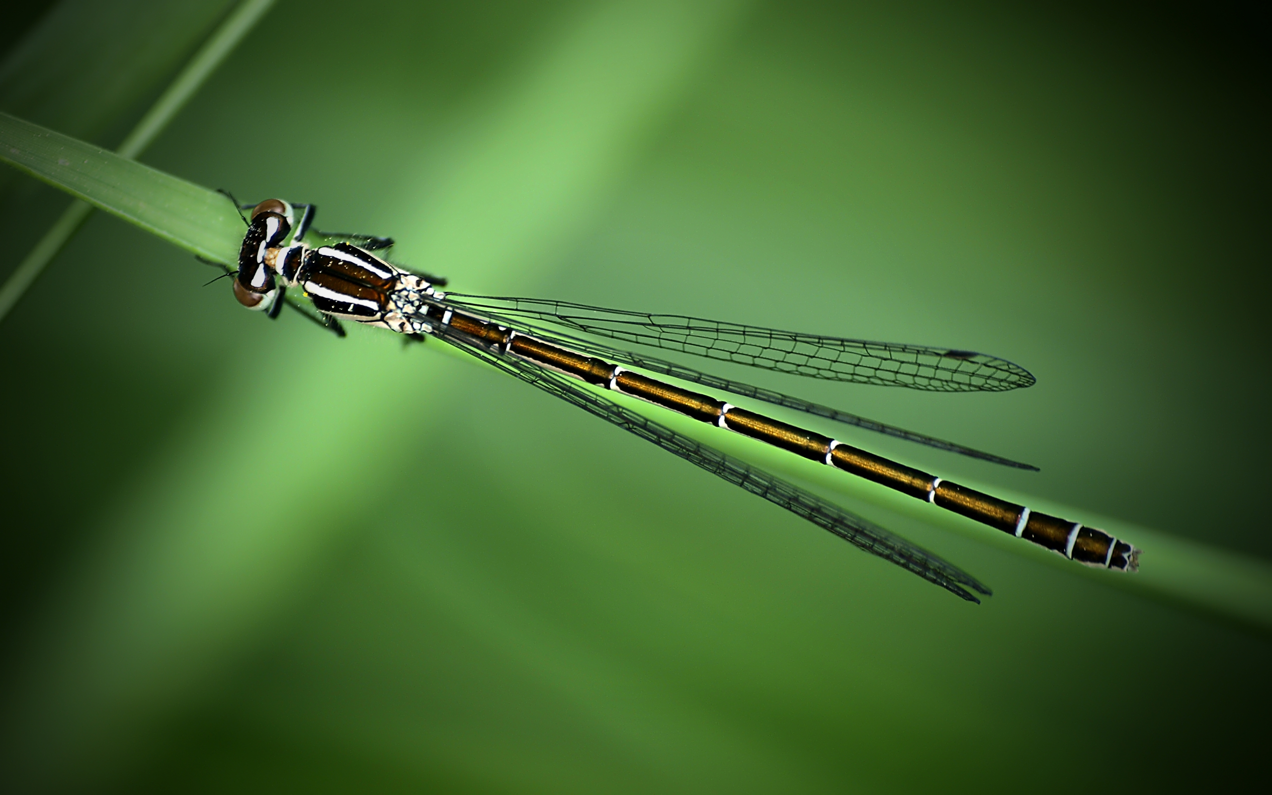 insect photos 24749