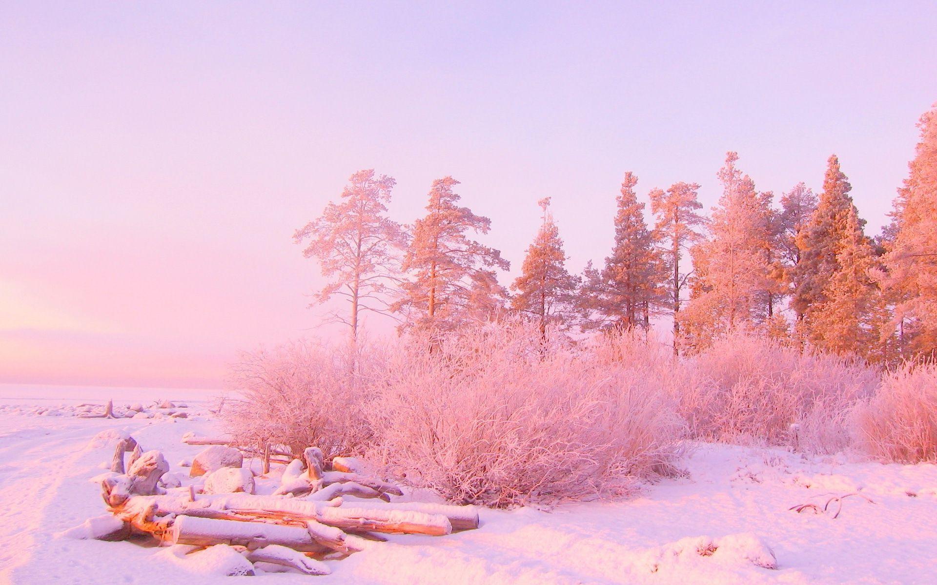 light pink nature wallpaper 24302