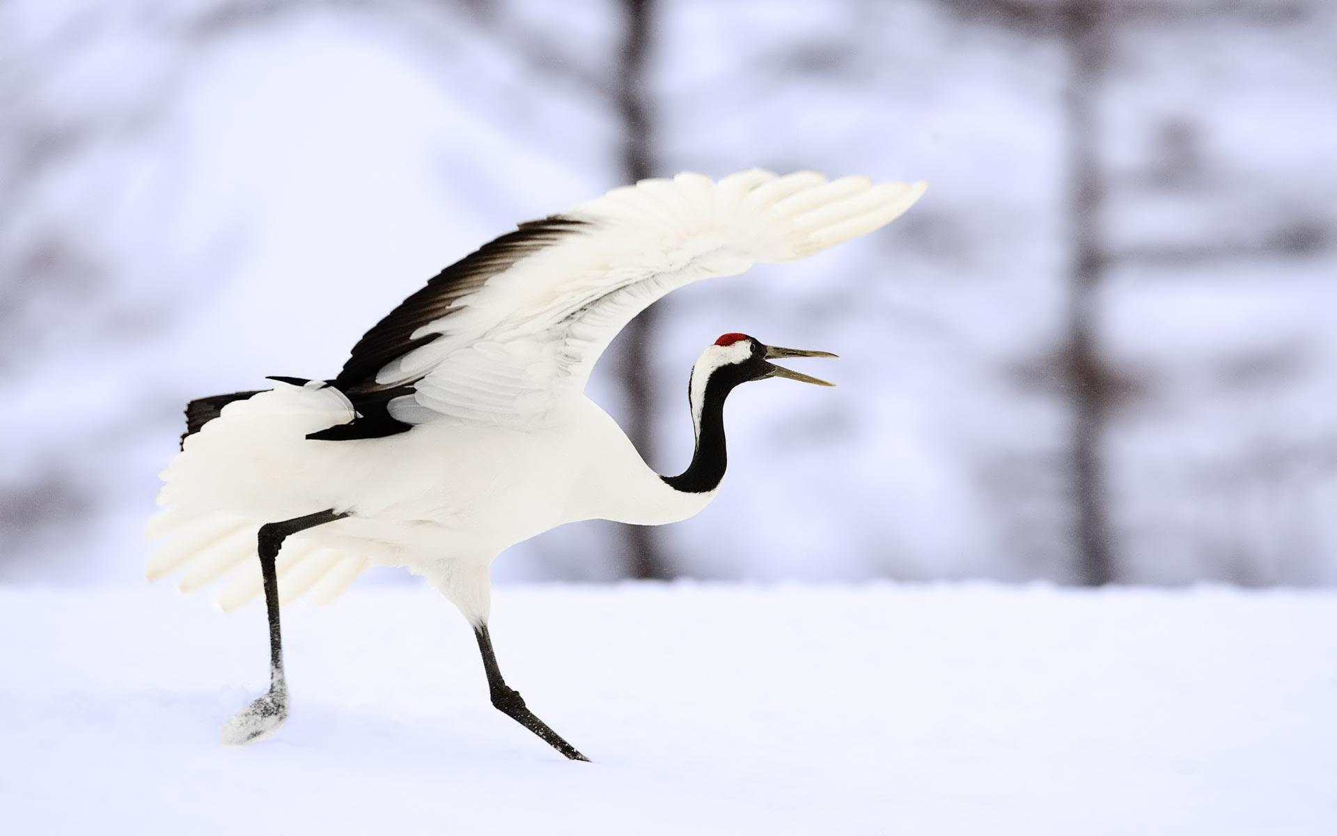 lovely crane bird wallpaper 38435
