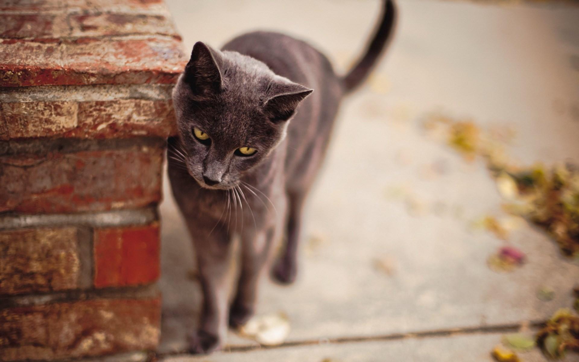 lovely grey cat city wallpaper 44110 1920x1200 px ~ hdwallsource