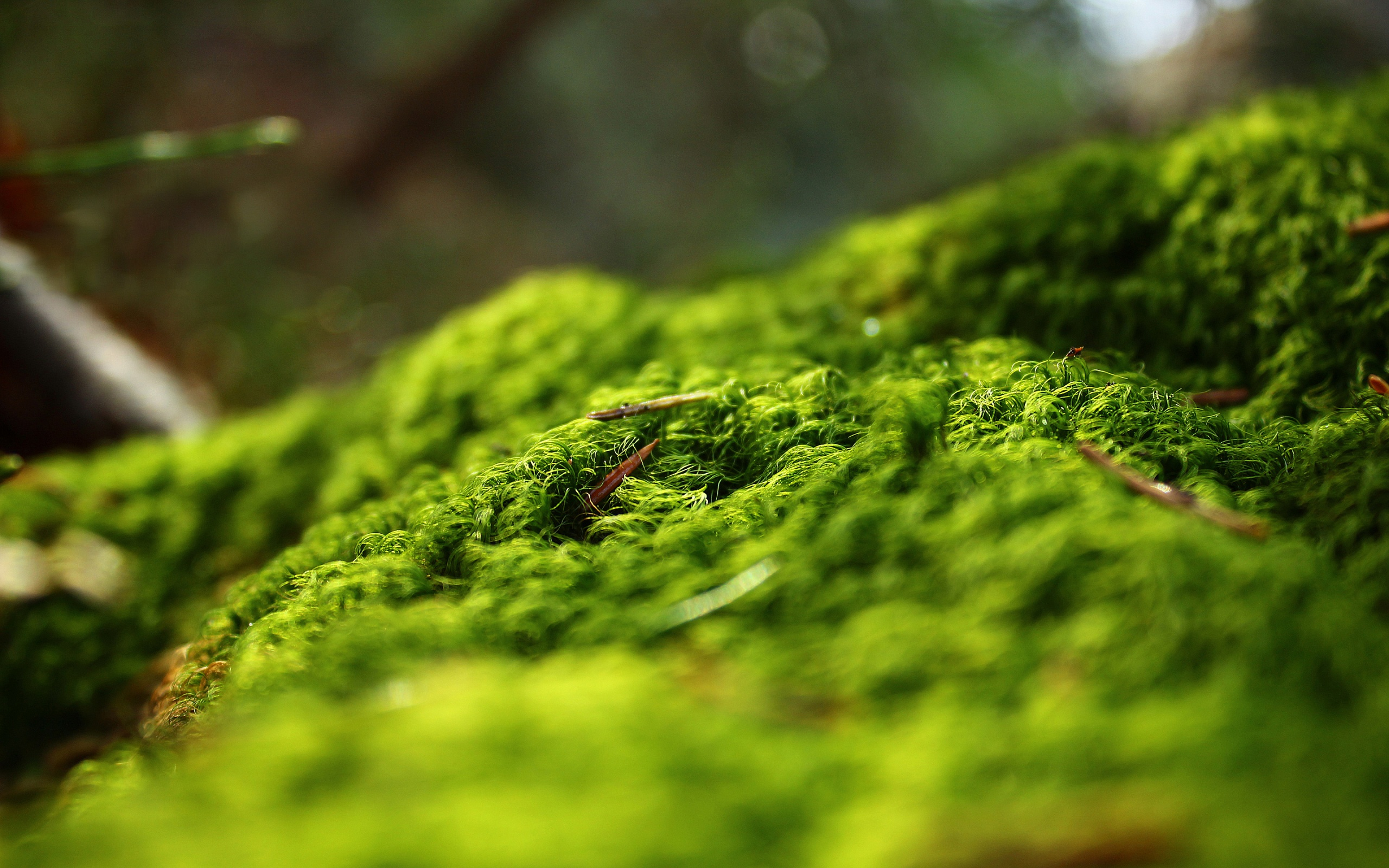 moss background 38577