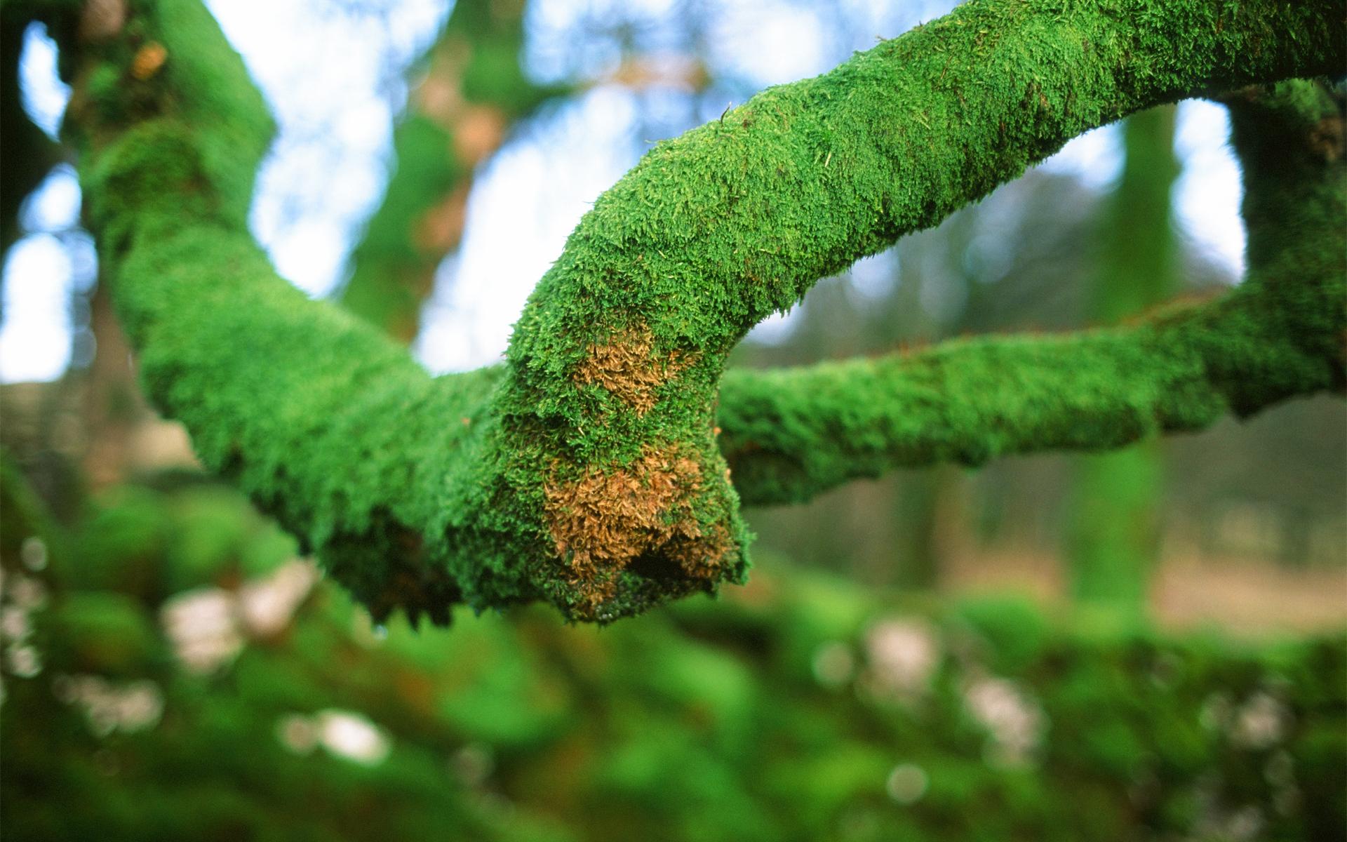 moss wallpaper 38572