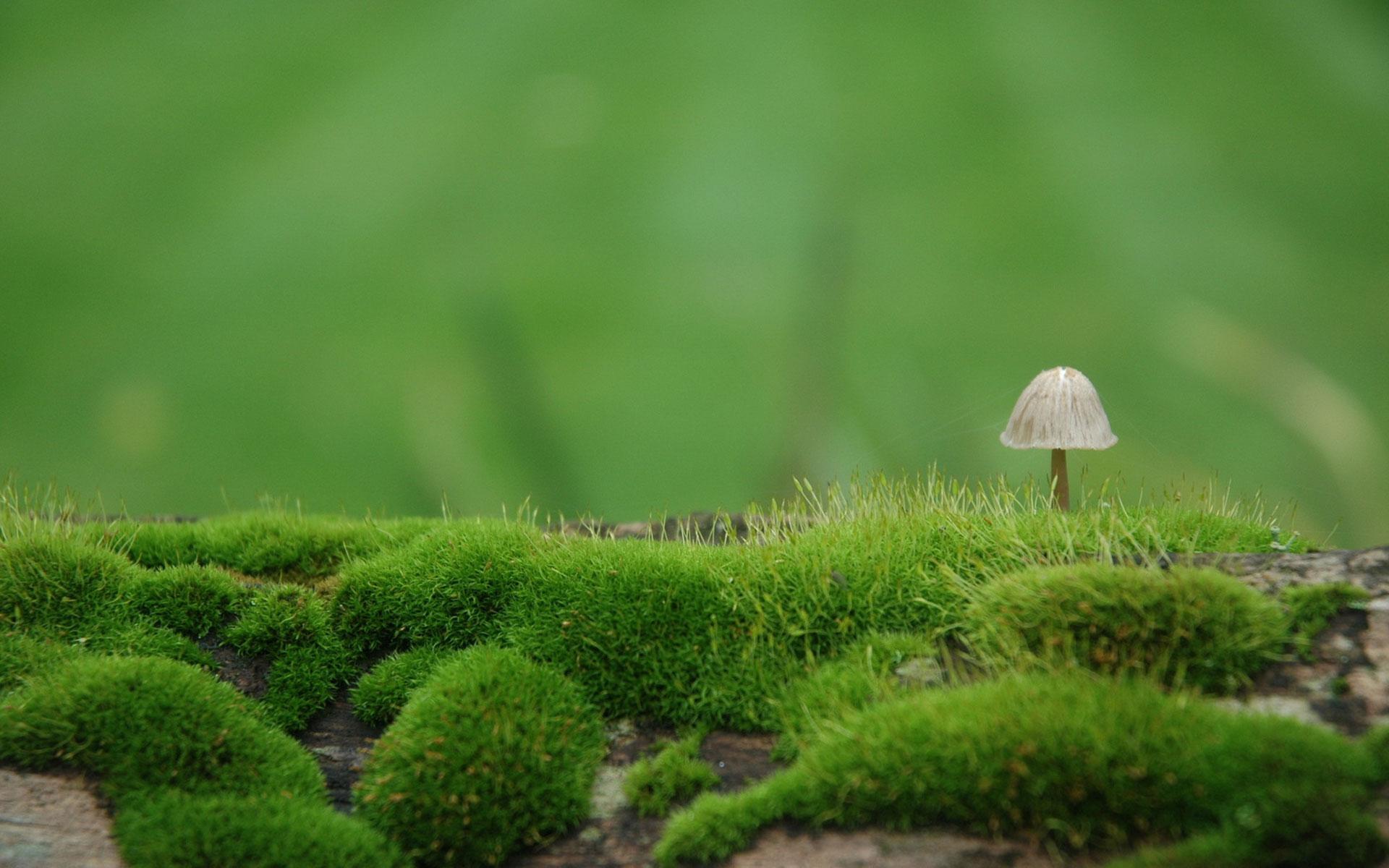 moss wallpaper 38579