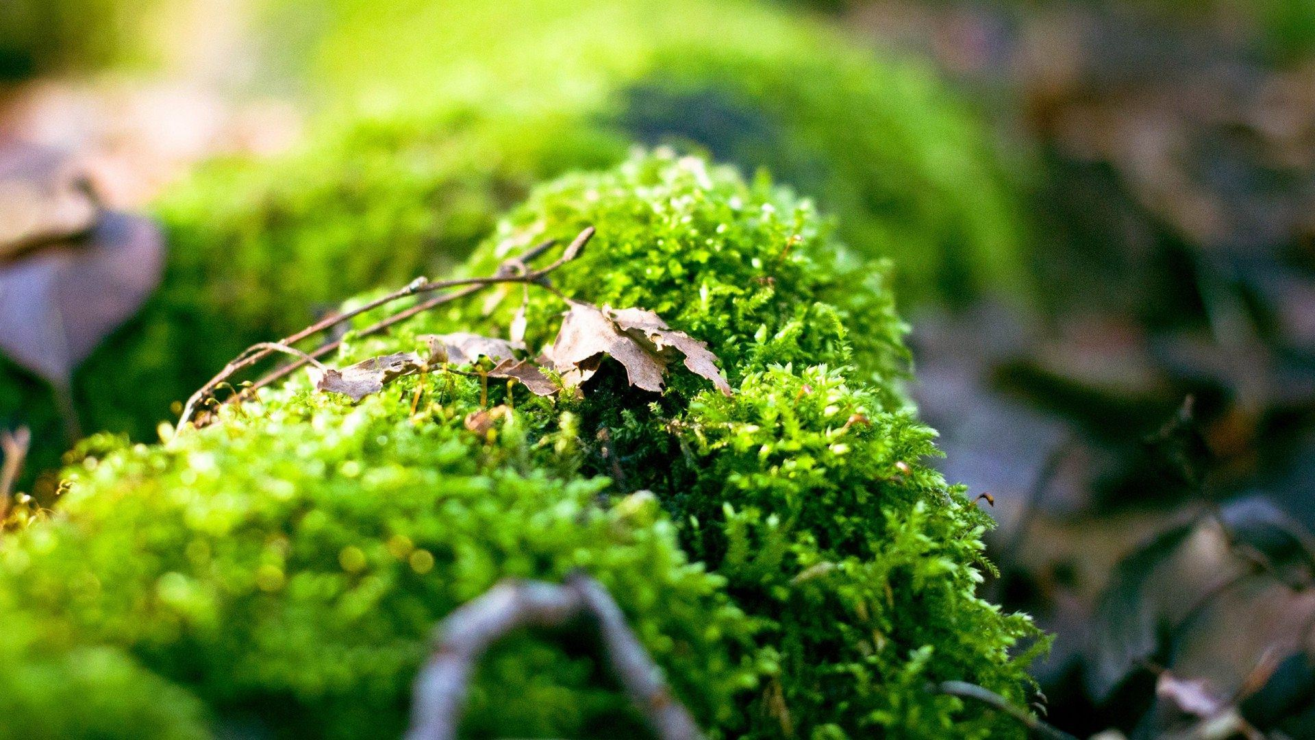 moss wallpapers 38580