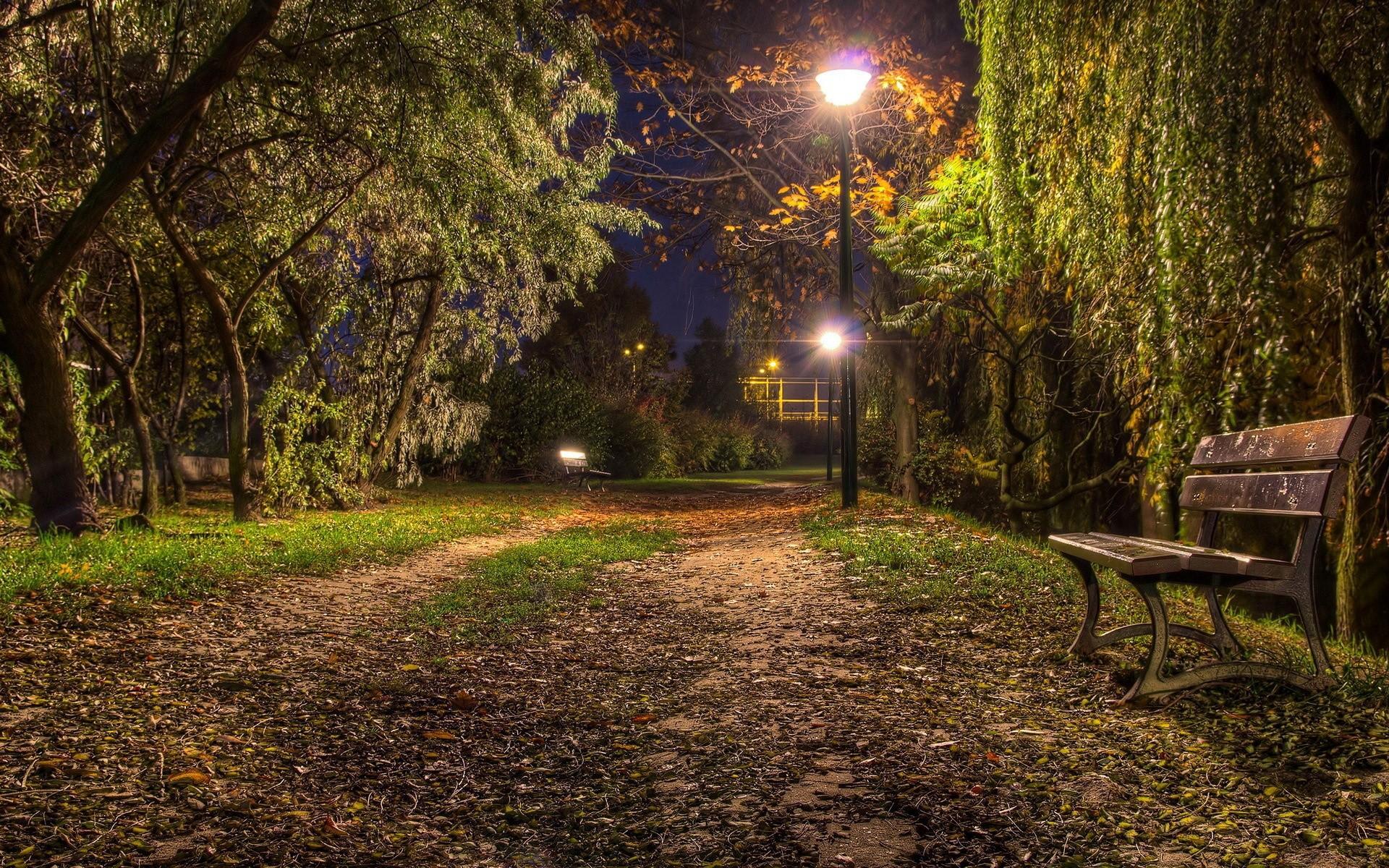 nature night bench wallpaper 44616