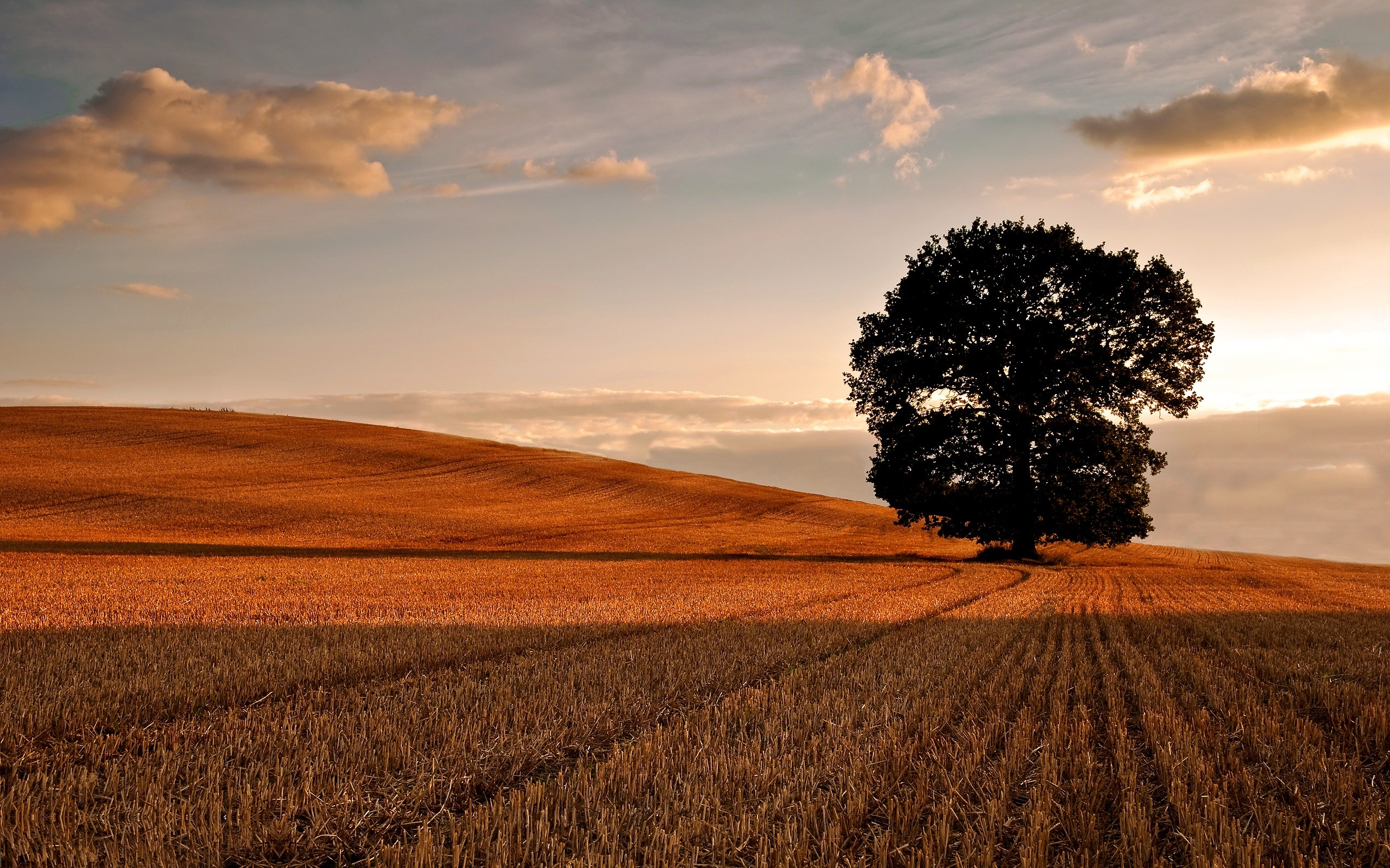 oak tree background 32965