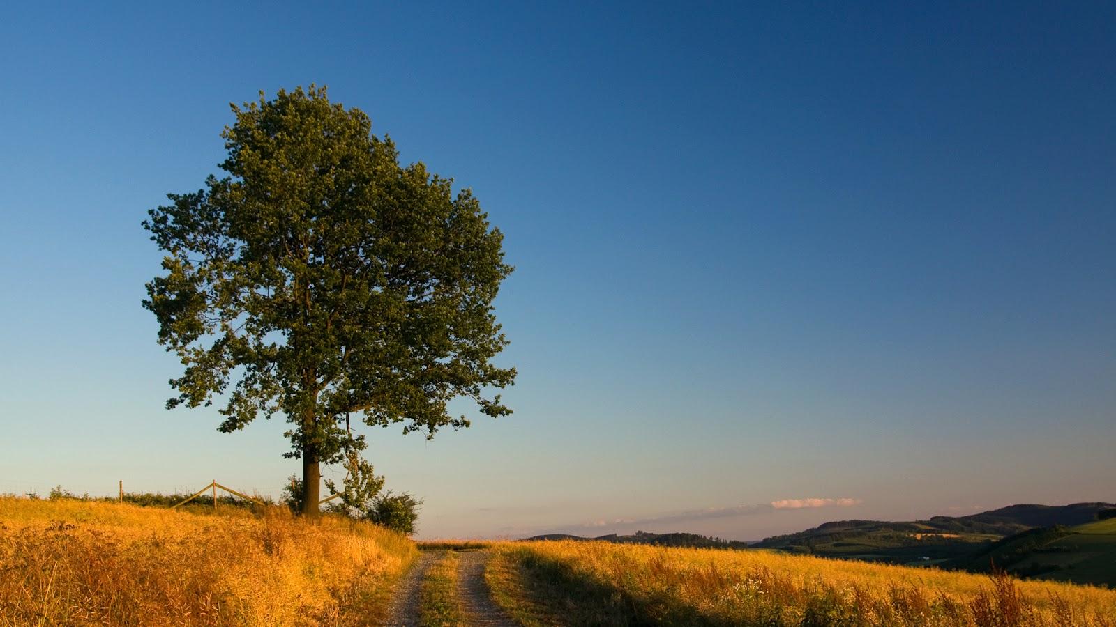 oak tree wallpaper 32957