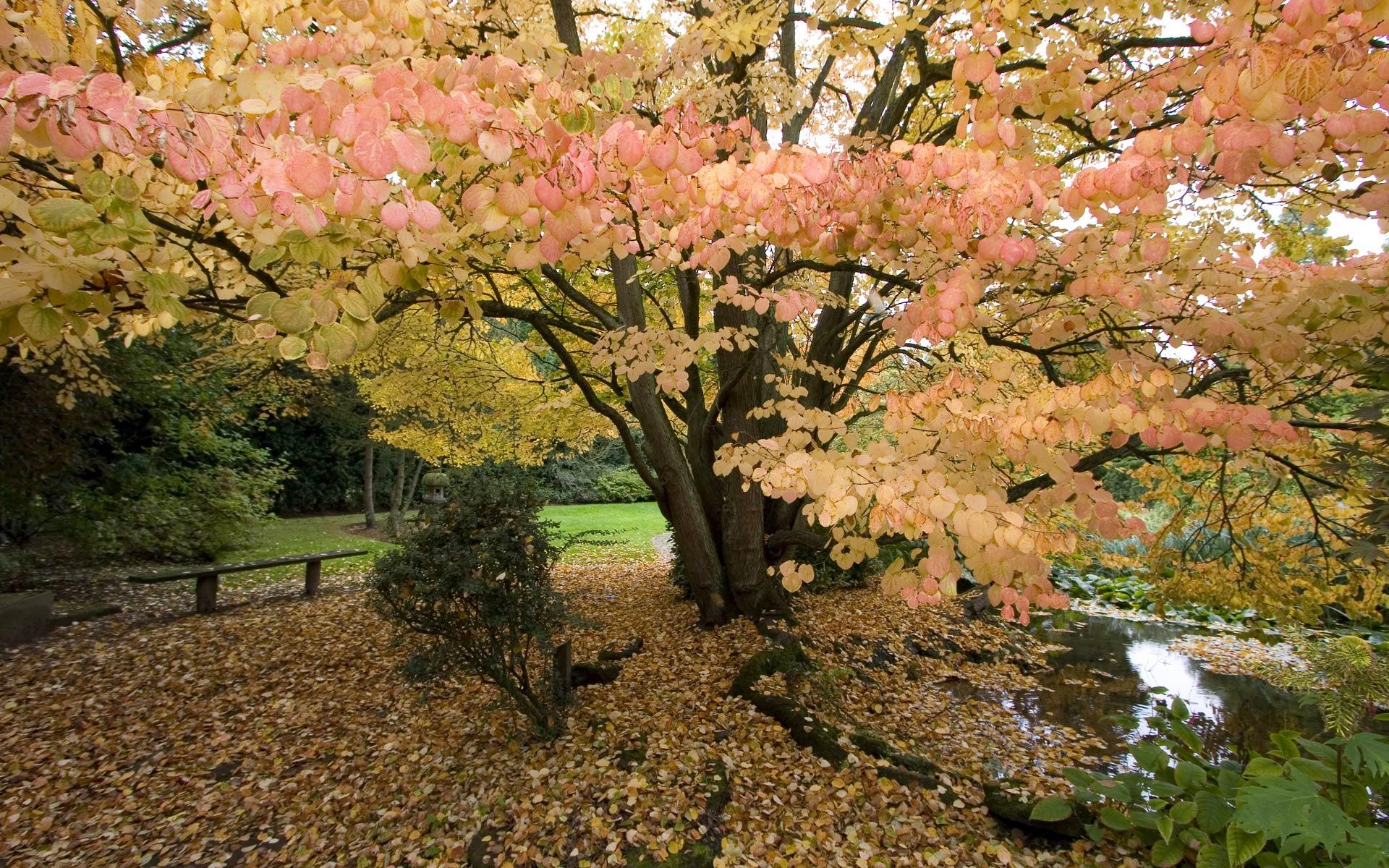 oak tree wallpaper 32959