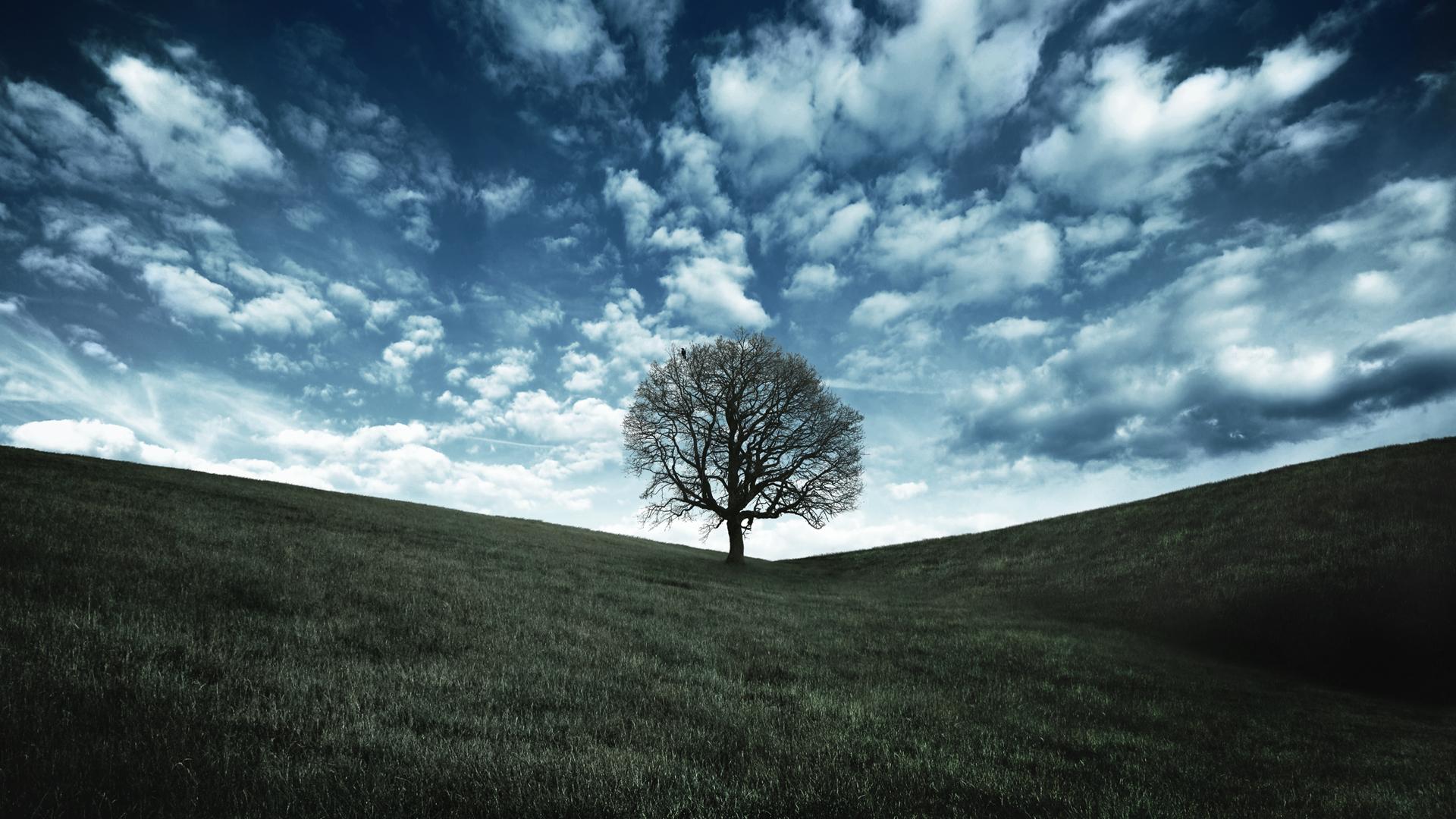 oak tree wallpapers 32972