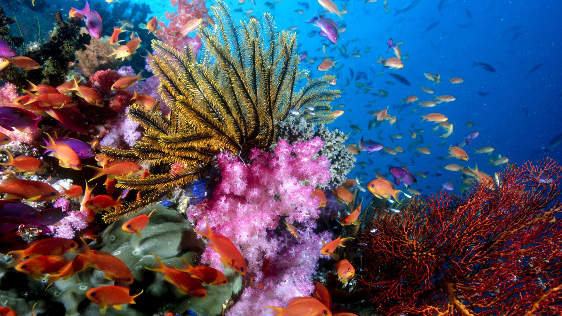ocean life 30939