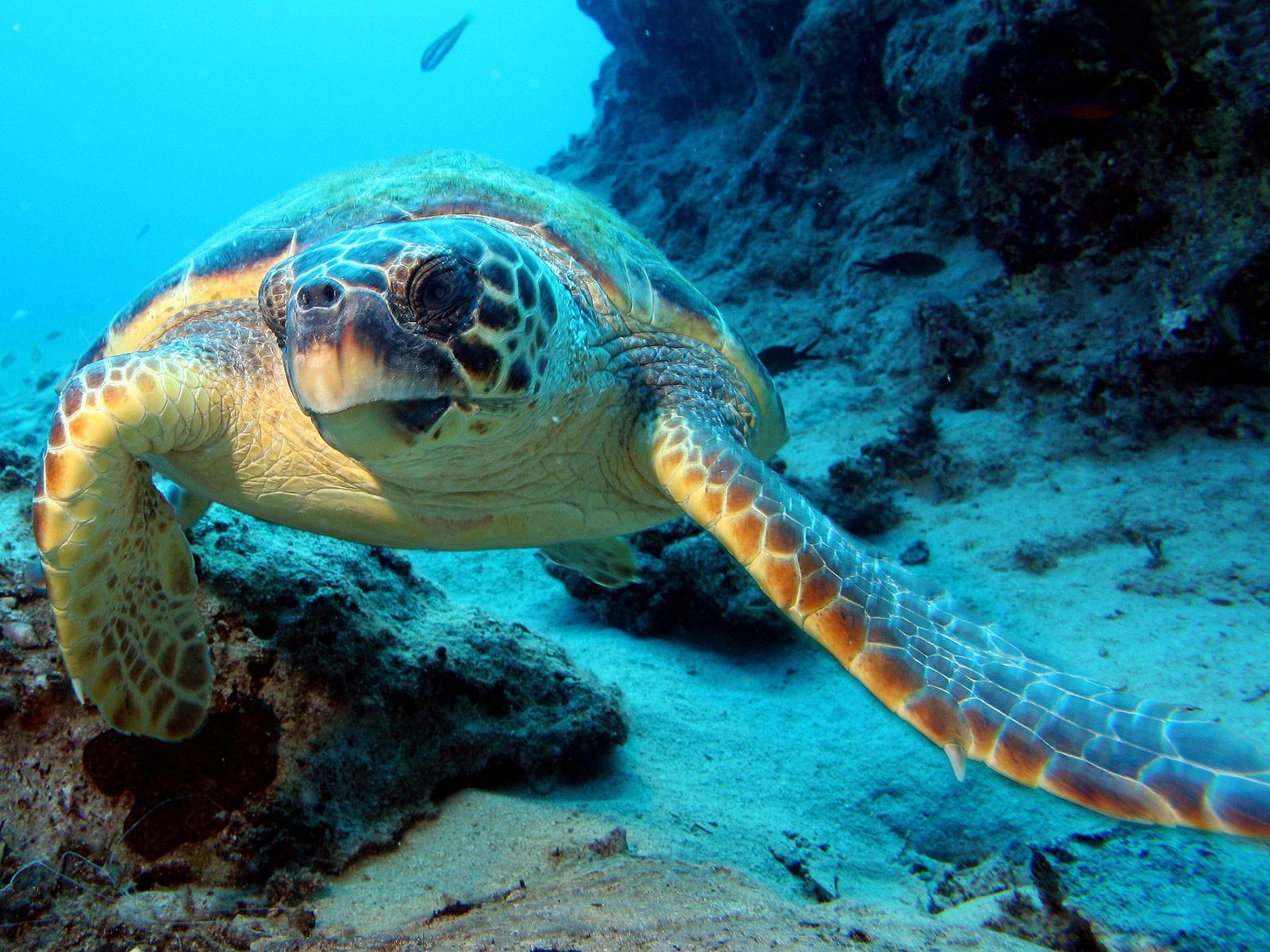 ocean life pictures 30944