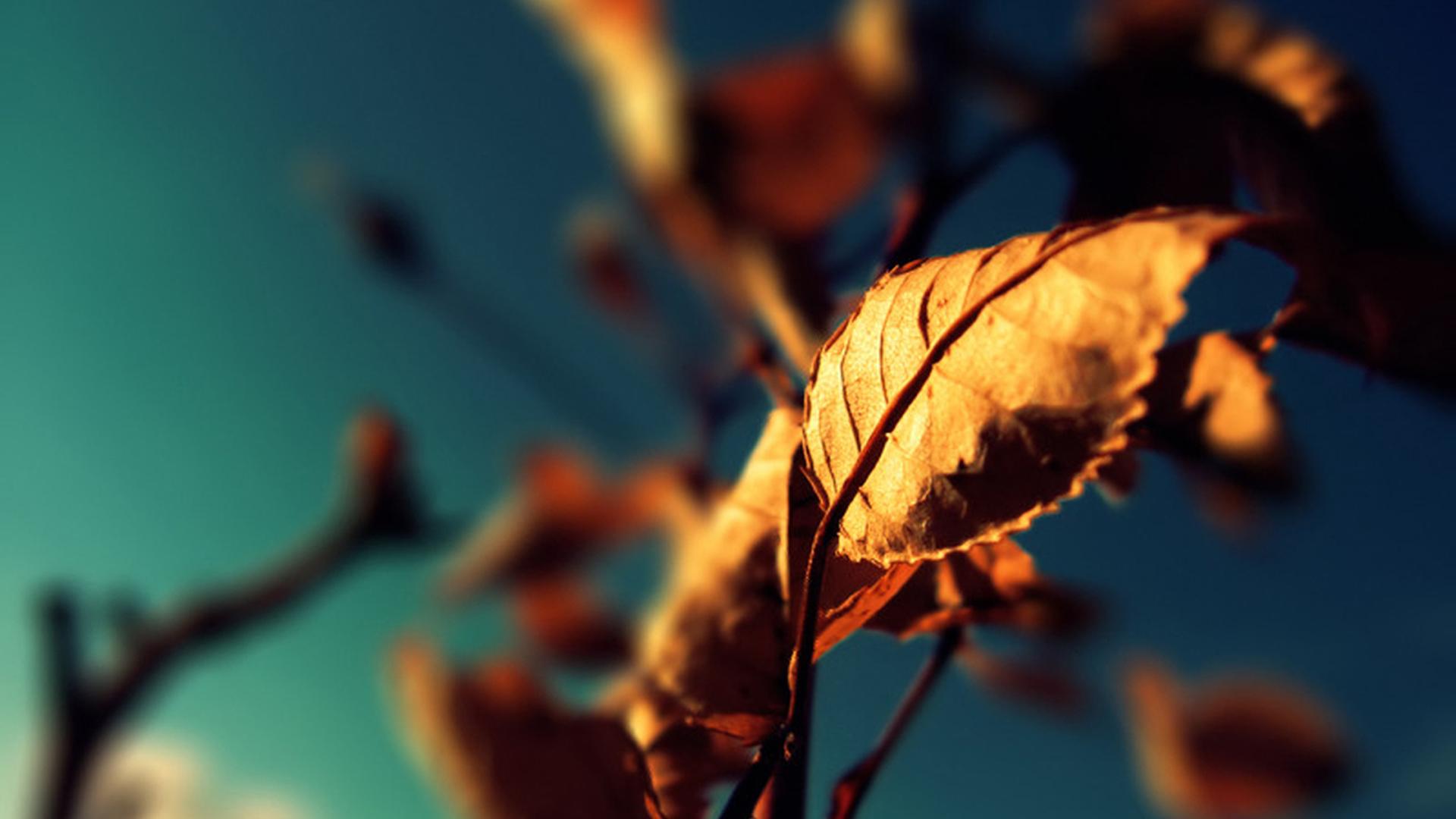 photography 28282