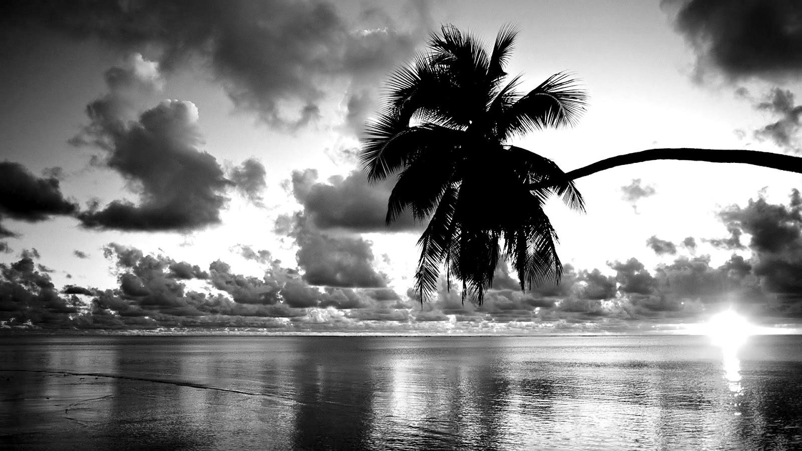 pretty black and white wallpaper 27055